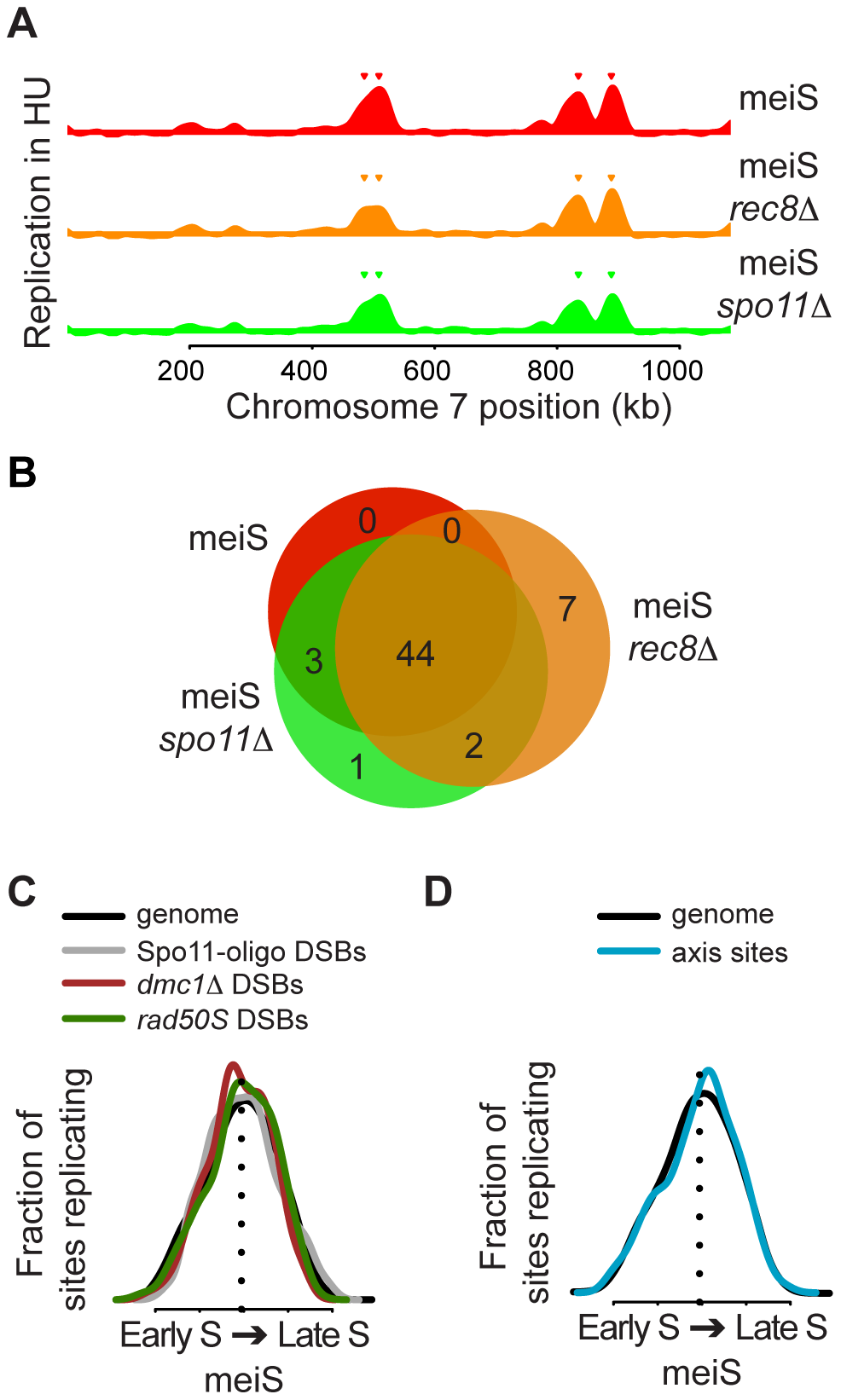 No relationship between DNA replication timing and recombination sites.