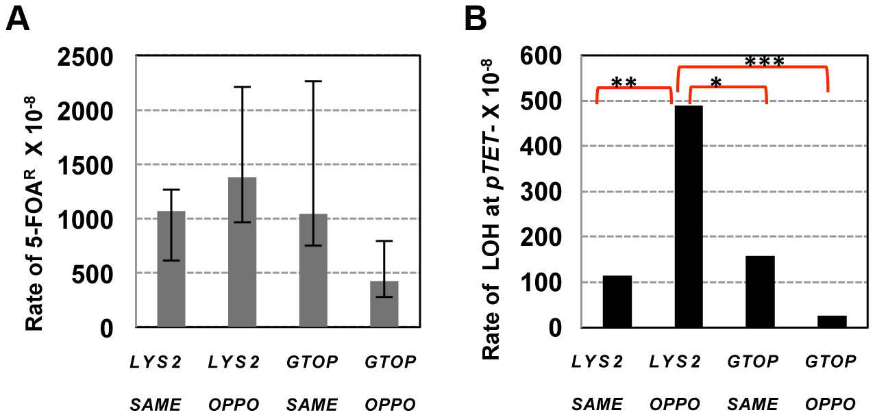 The rates of loss of heterozygosity at CHR3 in <i>top1</i>Δ backgrounds.