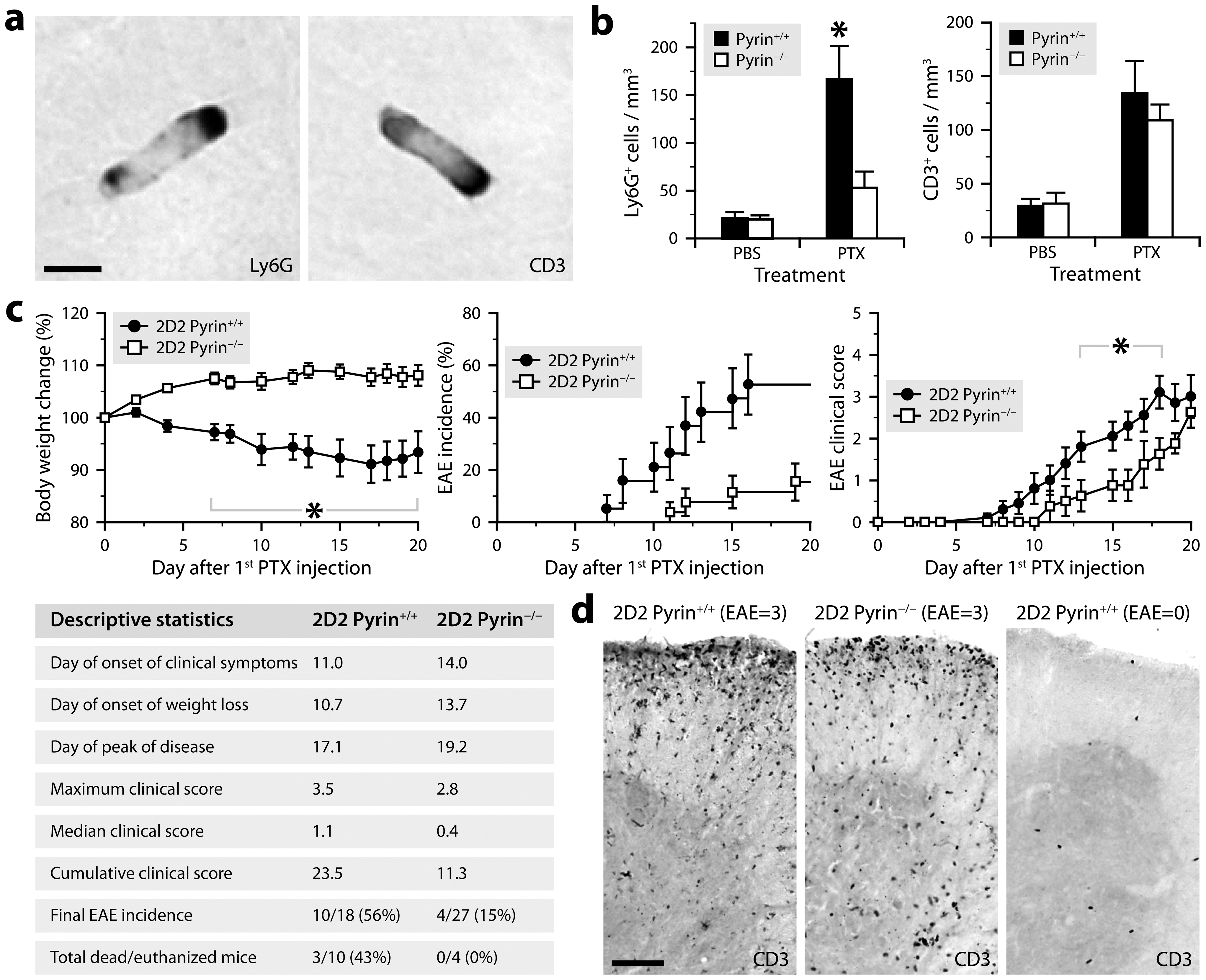 PTX requires pyrin to induce neutrophil intravascular crawling and to maximally promote EAE.