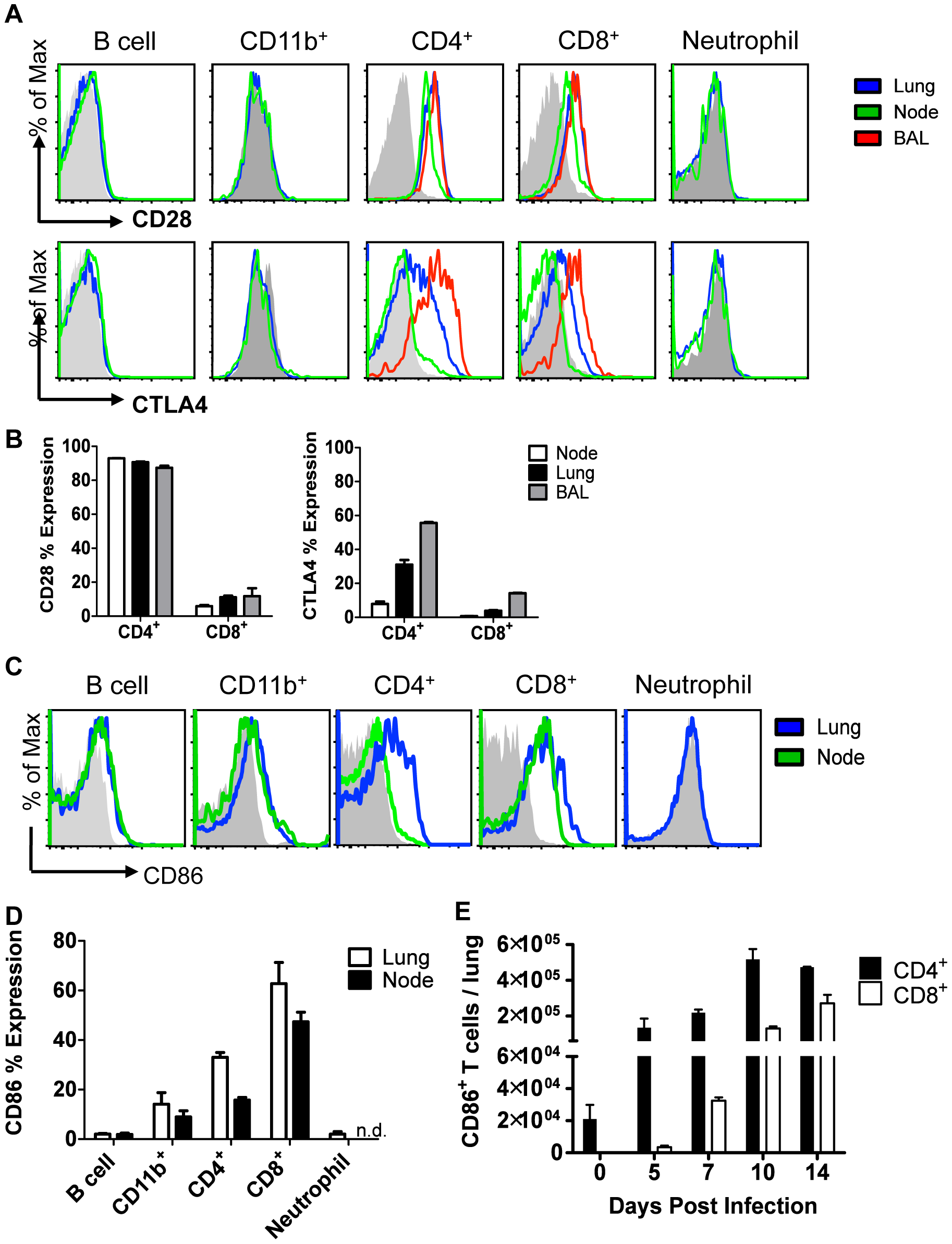 Cellular display of CD86 and its receptors CTLA4 and CD28 during resolution of IAV infection.