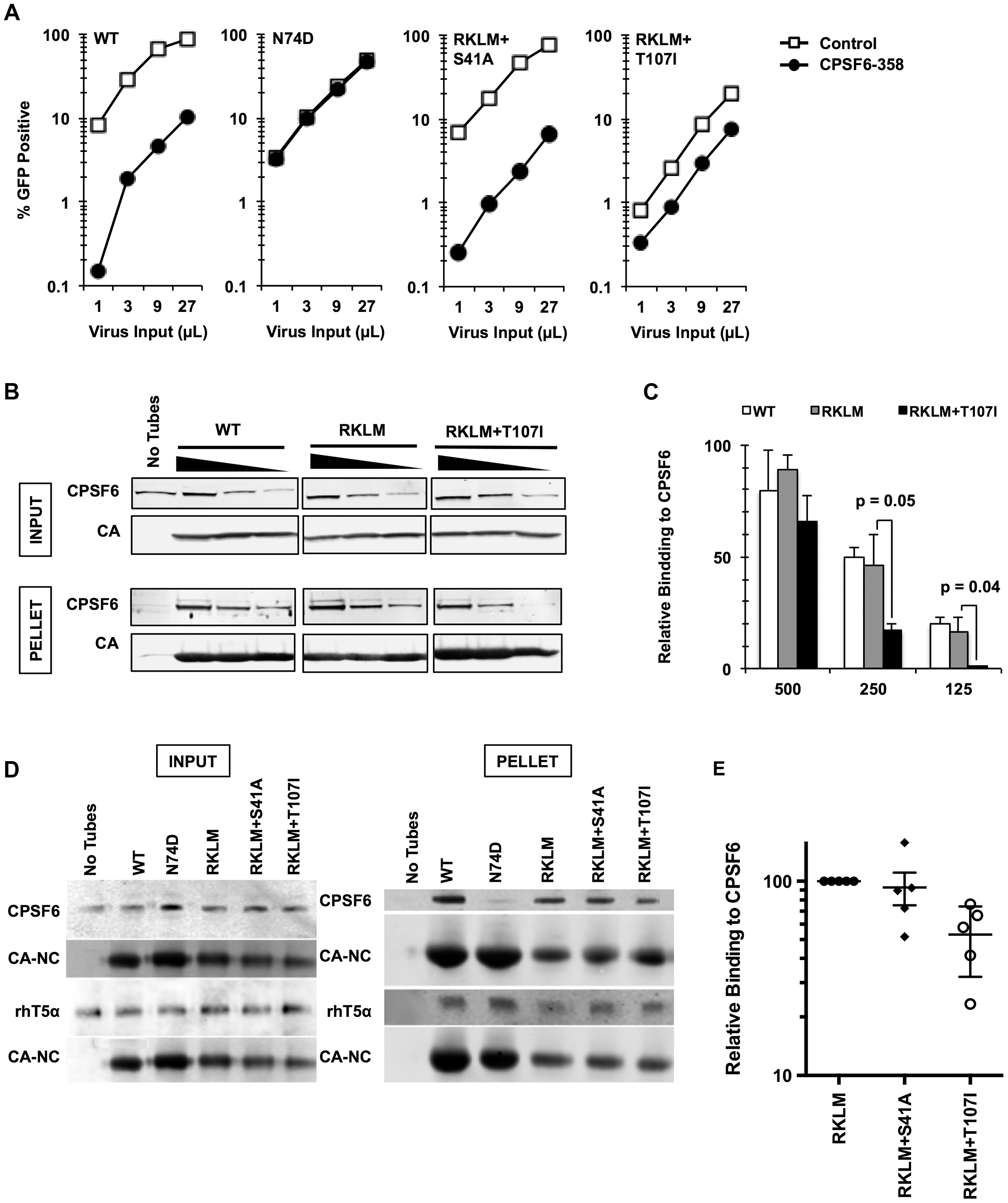 <i>In vitro</i>-derived CPSF6-resistant virus may alter CPSF6 binding.
