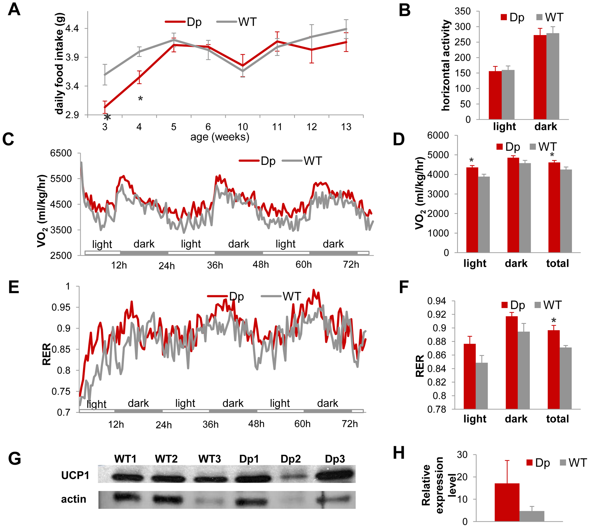 <i>Dp(11)17/+</i> mice (red) have similar food intake and activity levels, but higher energy expenditure than WT mice (gray), which may be partially accounted for by the difference in expression levels of UCP1 in the BAT tissue.