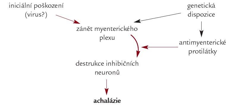 Schéma. Uvažované etiopatogeneze achalázie jícnu.
