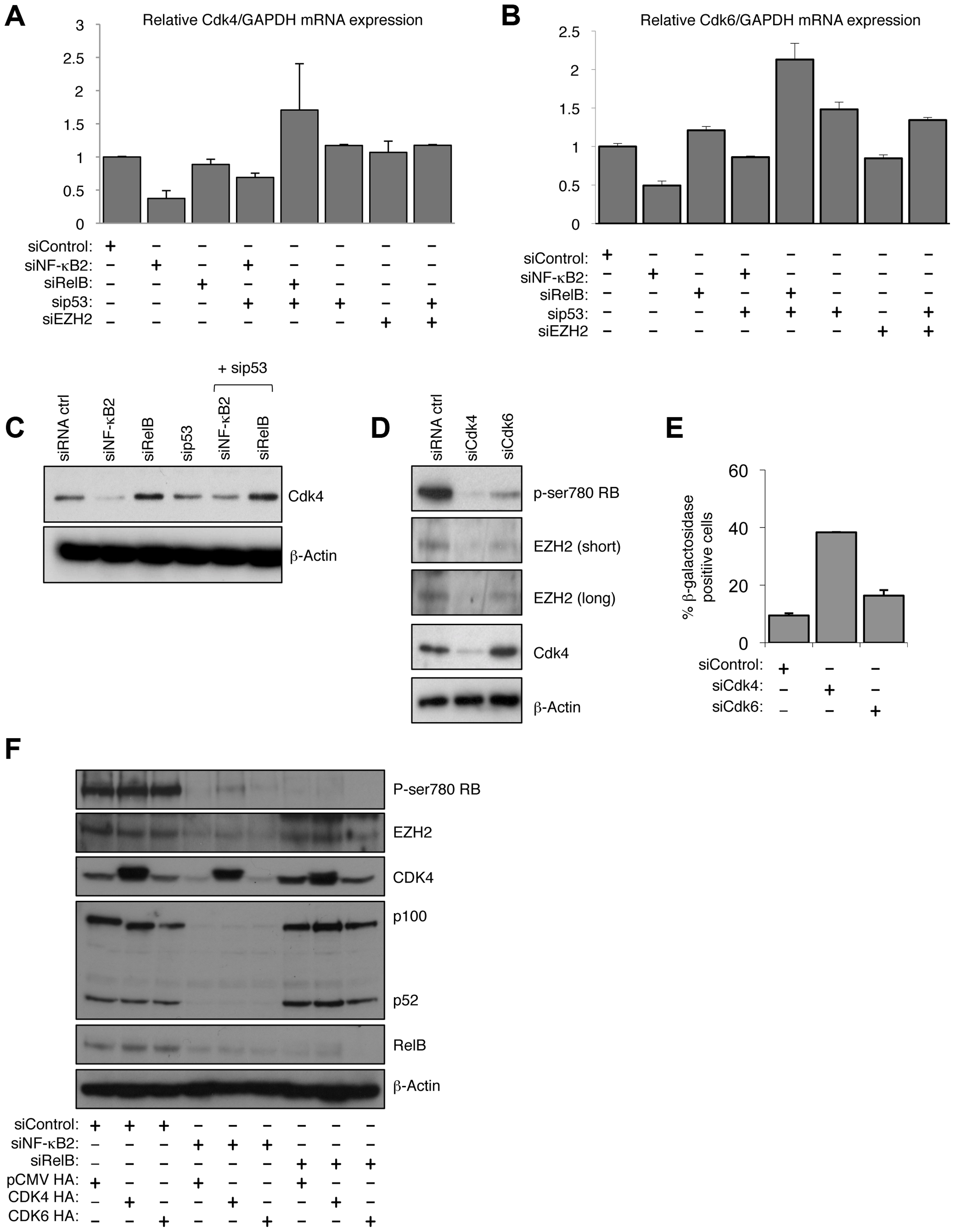 NF-κB2 controls Rb phosphorylation, EZH2 expression and senescence through CDK4 and CDK6 regulation.