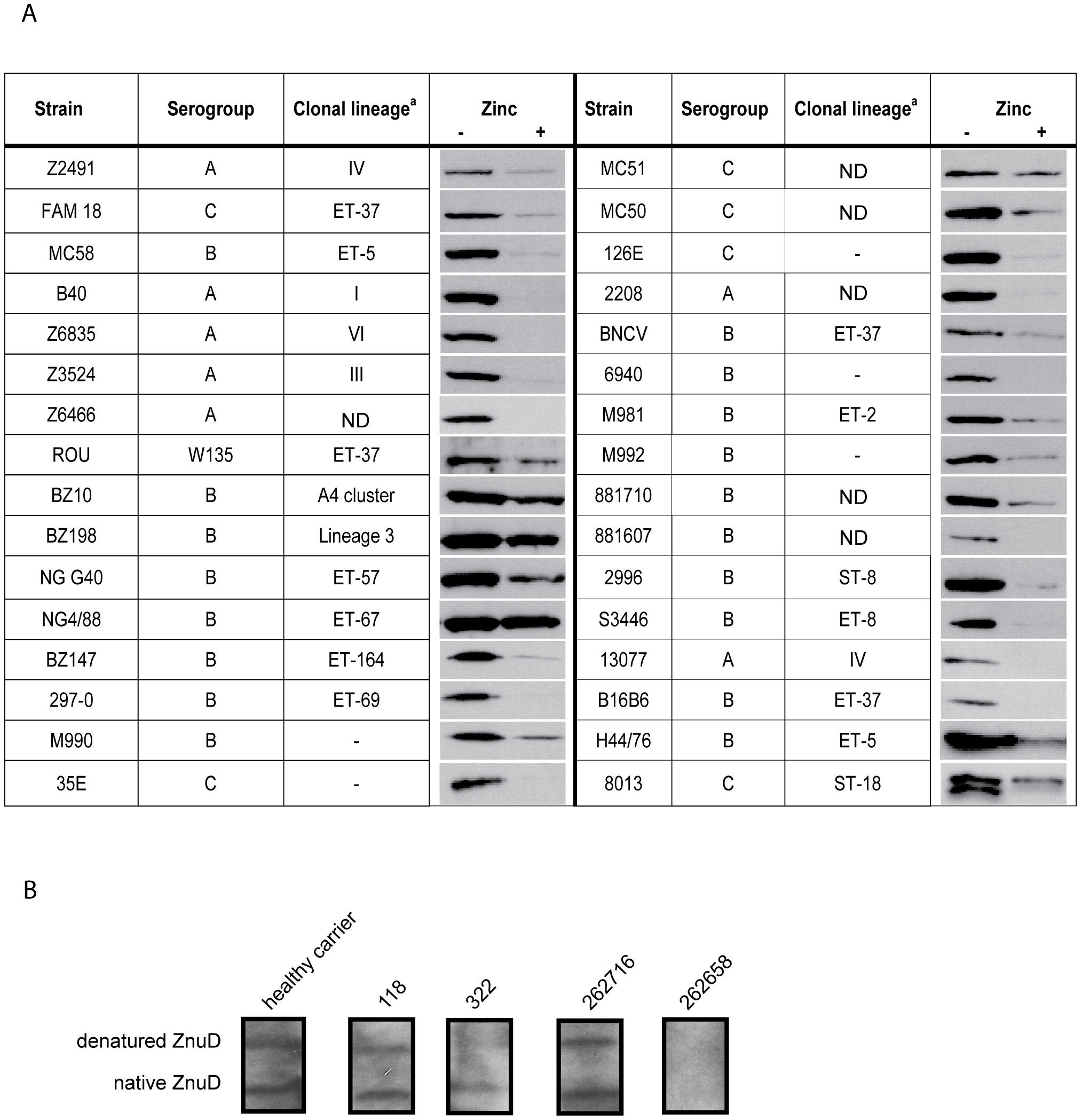 ZnuD synthesis in meningococcal isolates and in vivo.