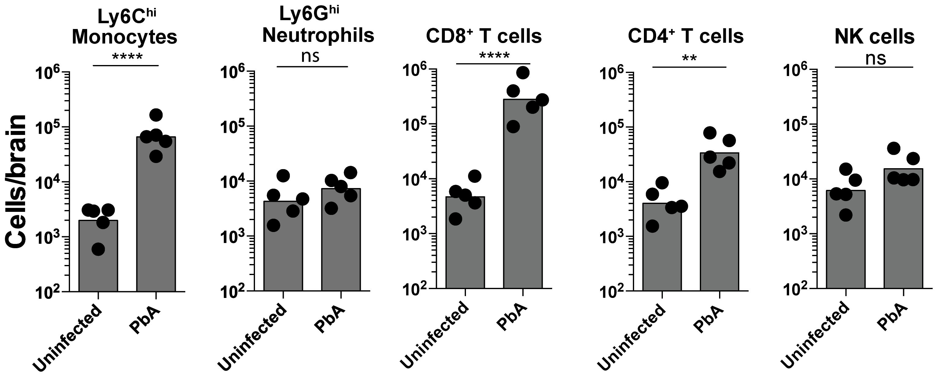 Monocytes and CD8<sup>+</sup> T lymphocytes accumulate in the brain during ECM.