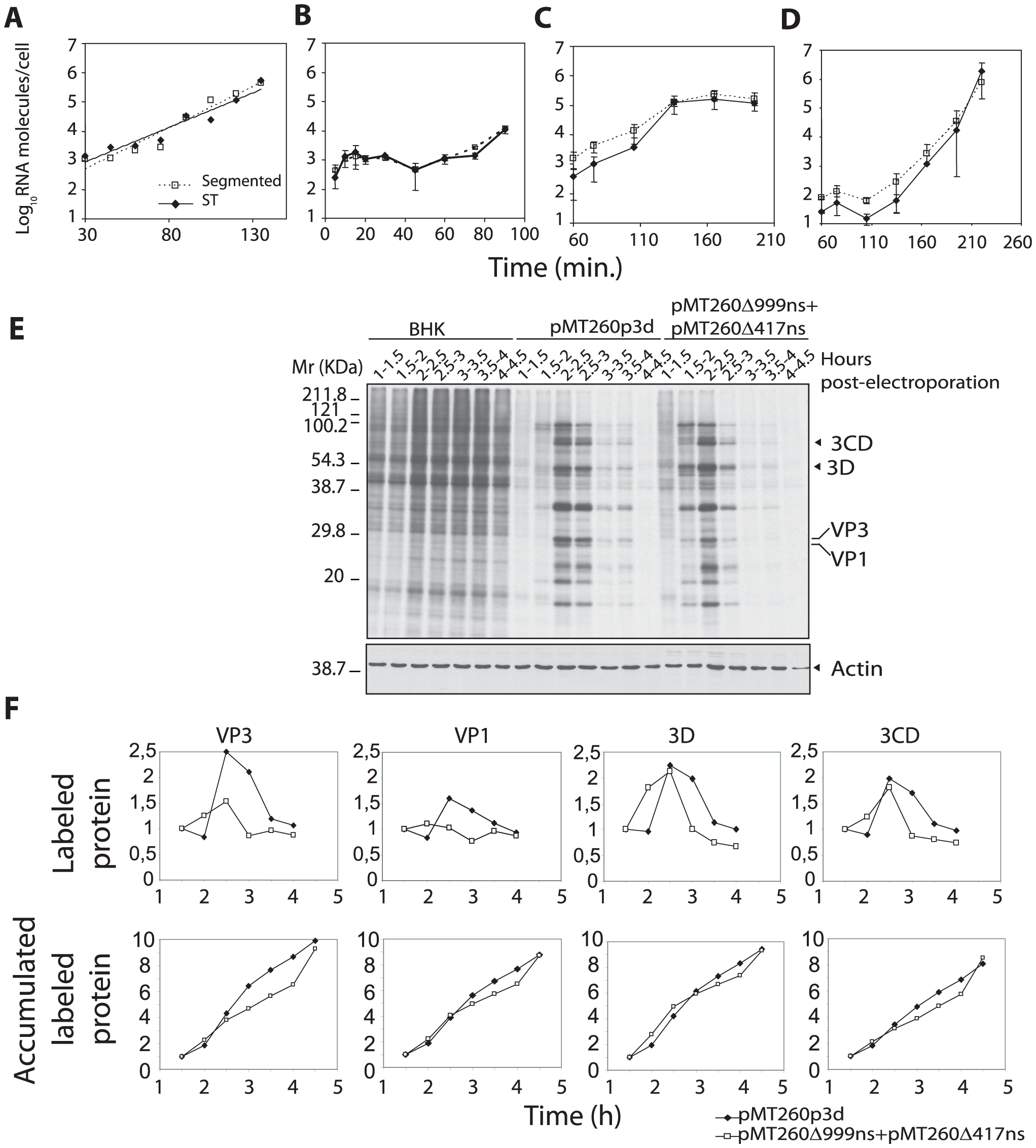 Replication kinetics of C-S8p260 (segmented) and C-S8p260p3d (ST) FMDV in BHK-21 cells.