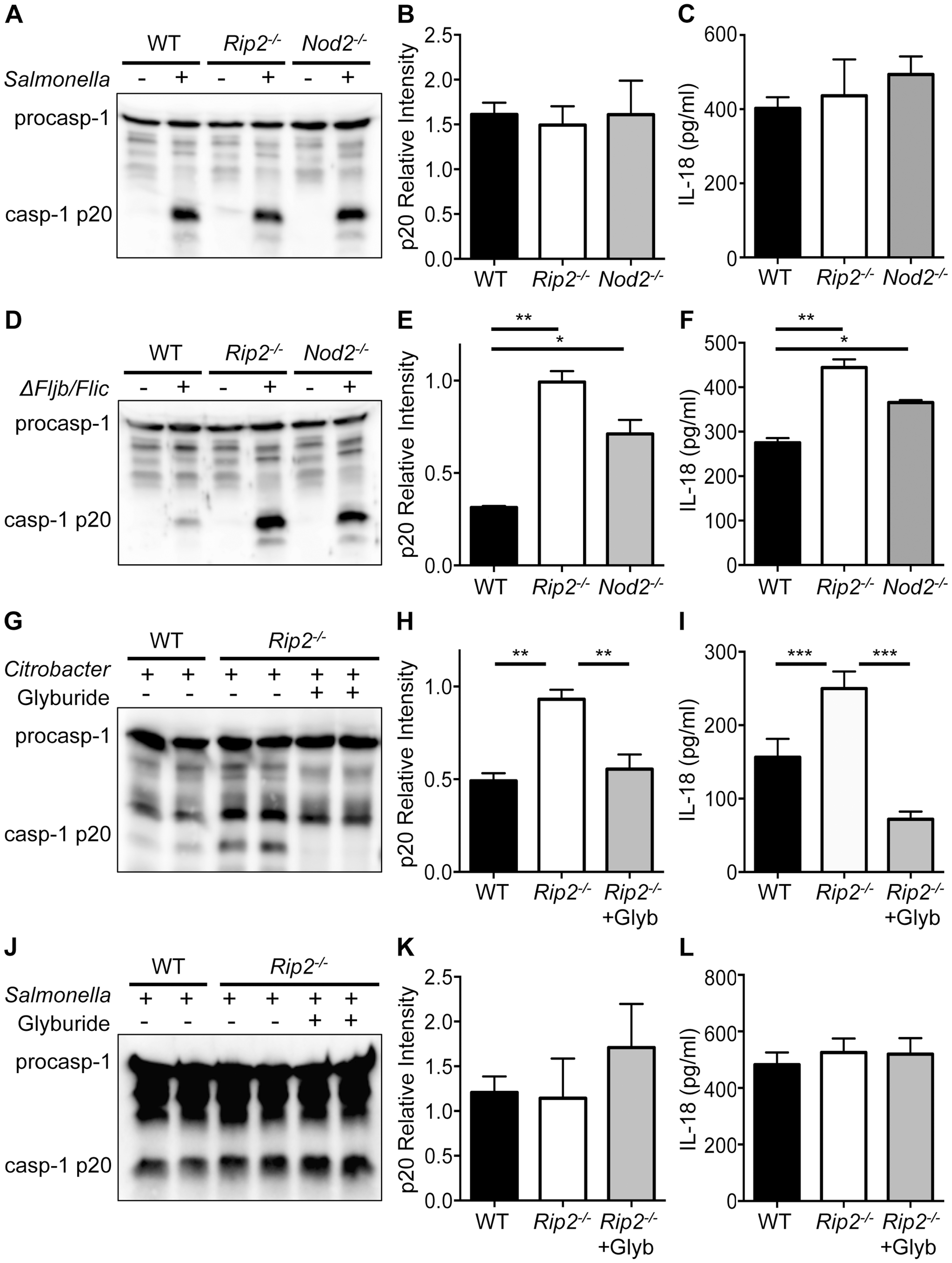 NOD2 and RIP2 specifically regulate NLRP3 inflammasome activation.