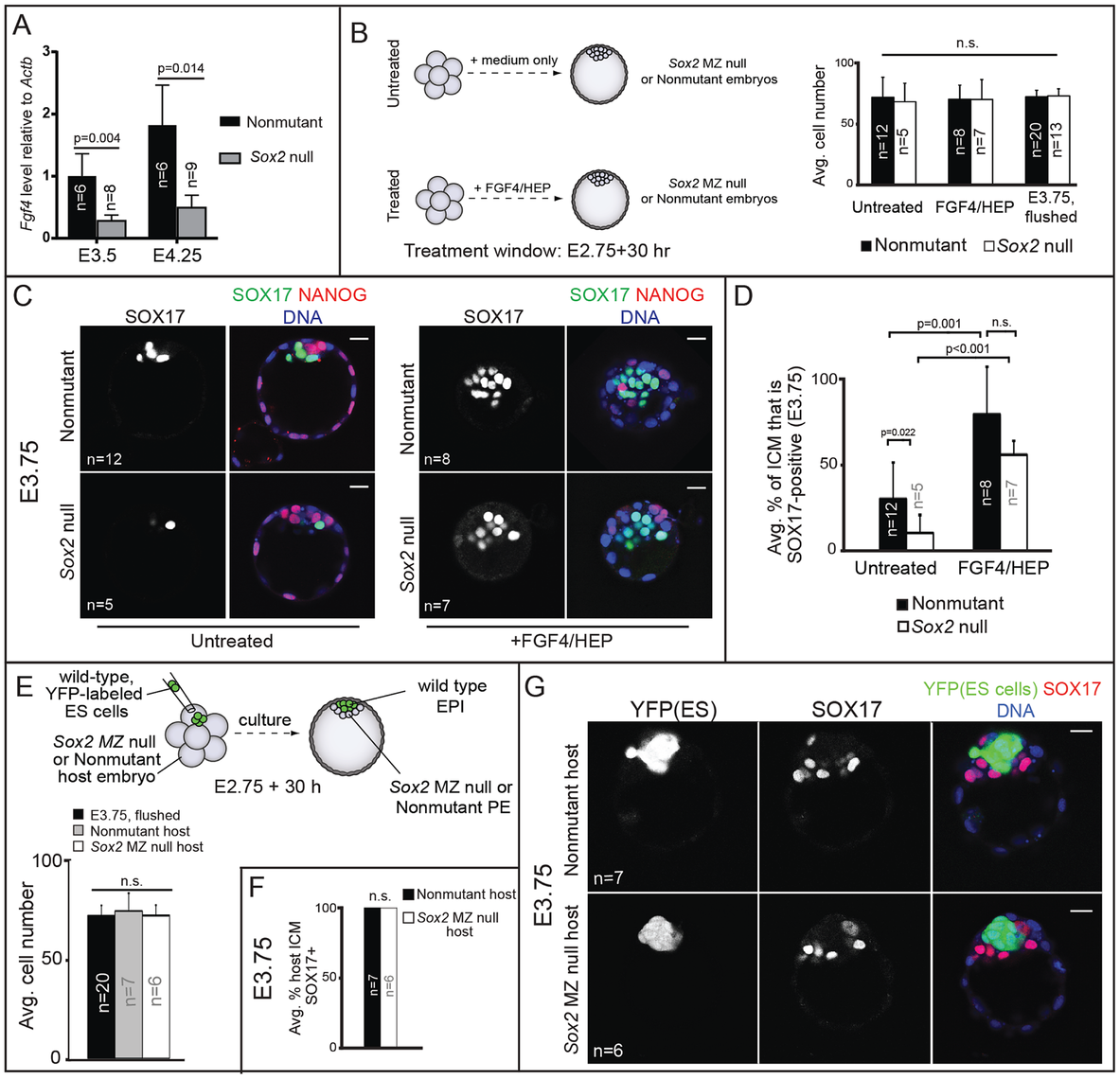 <i>Sox2</i> promotes PE development non cell-autonomously via FGF4.