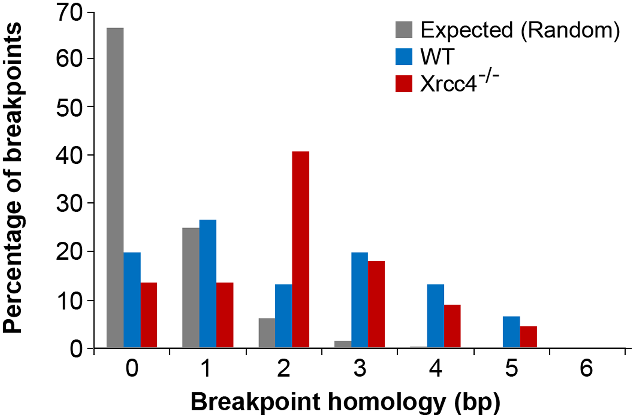 Comparison of observed <i>de novo</i> CNV breakpoint junction sequence homology in wild-type and <i>Xrcc4<sup>−/−</sup></i> cells.