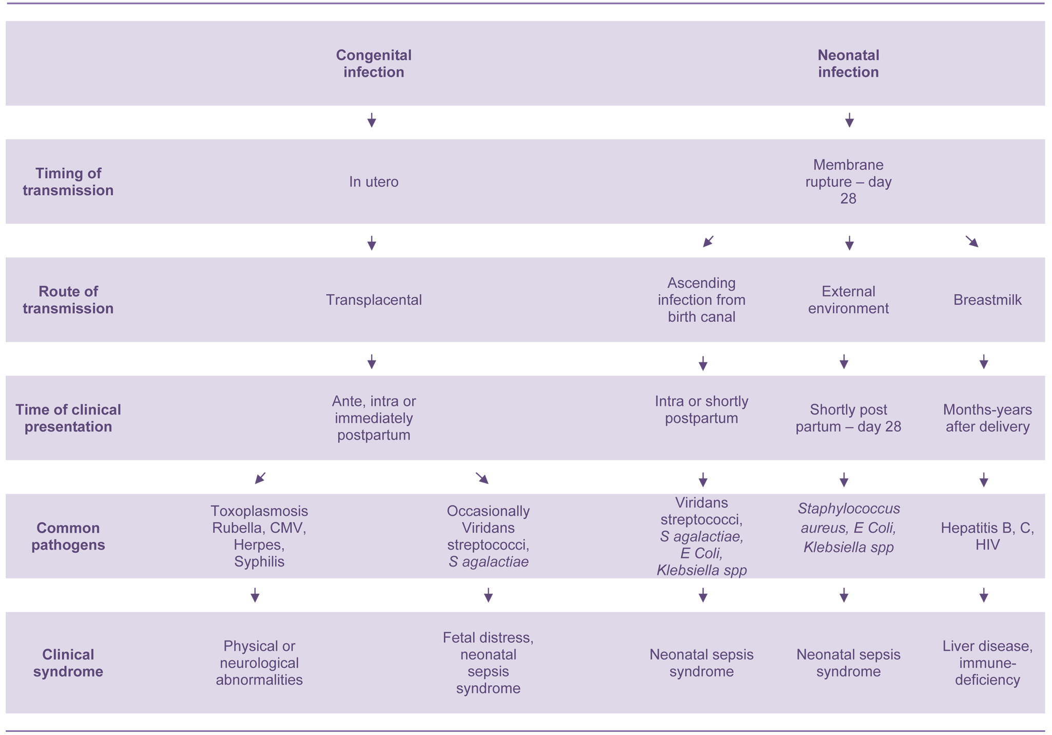 Pathogenesis of congenital and neonatal infections.