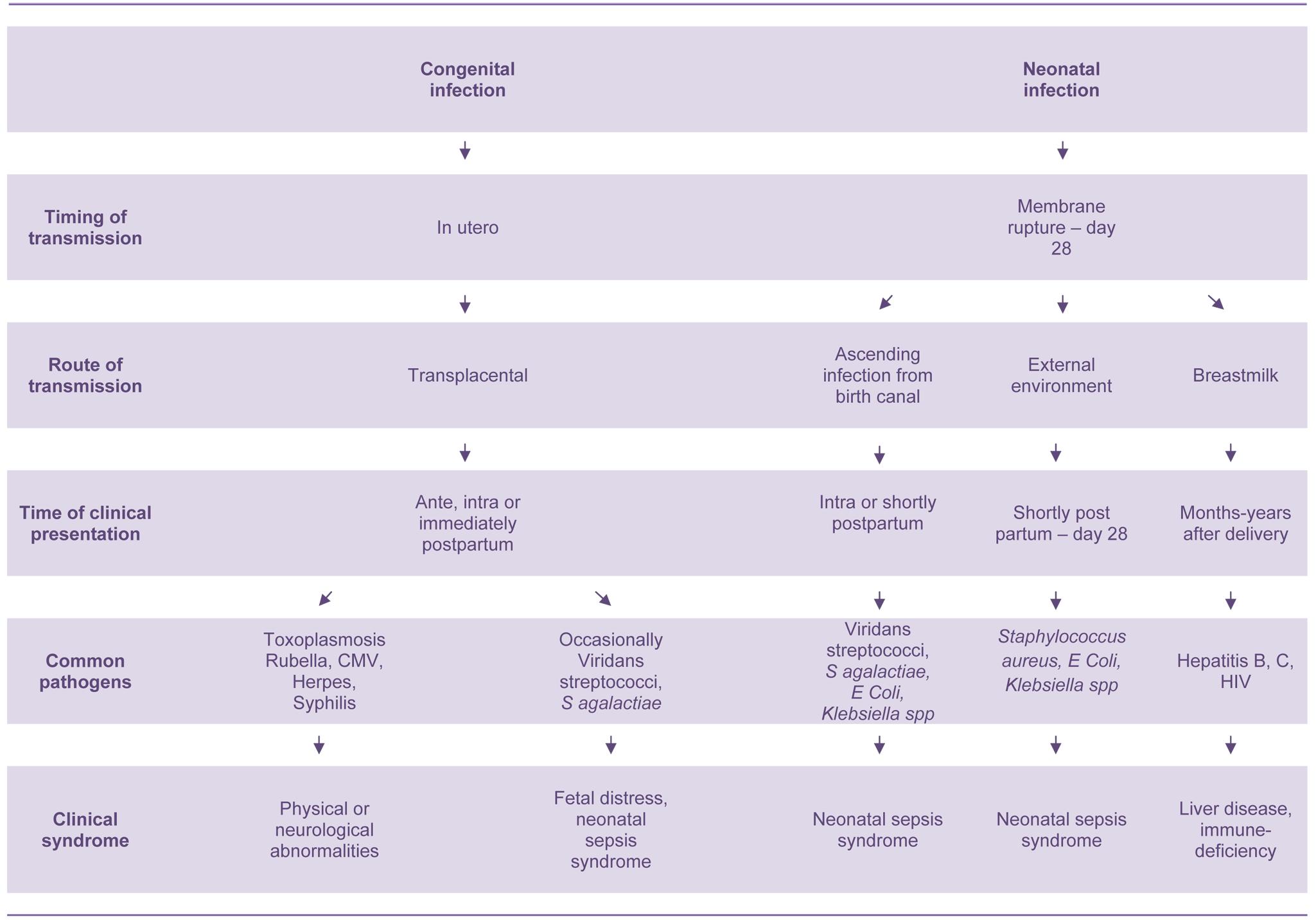 Pathogenesis of congenital and neonatal infections.