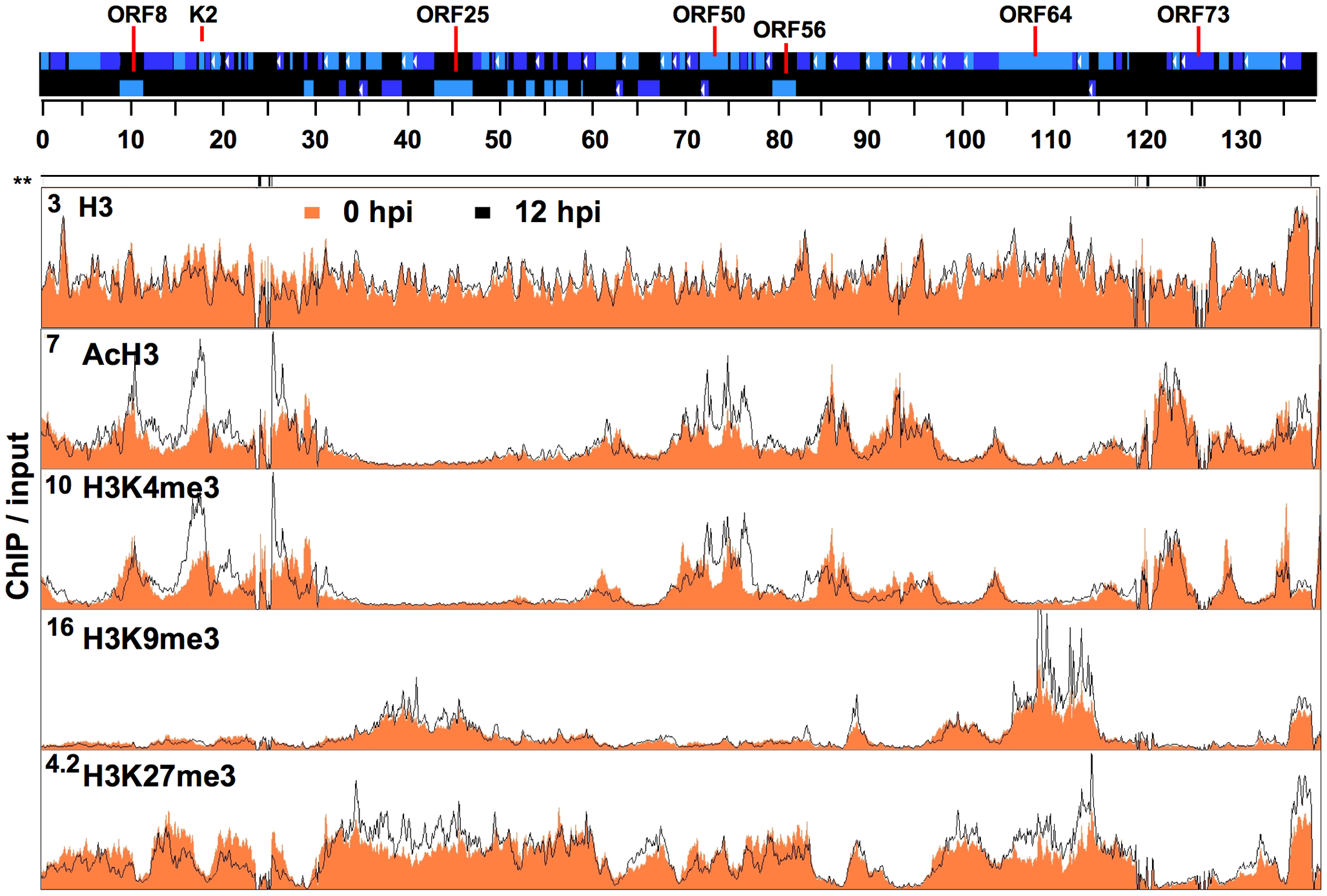 Genome-wide mapping of histone modifications on the KSHV genome during latency and reactivation.
