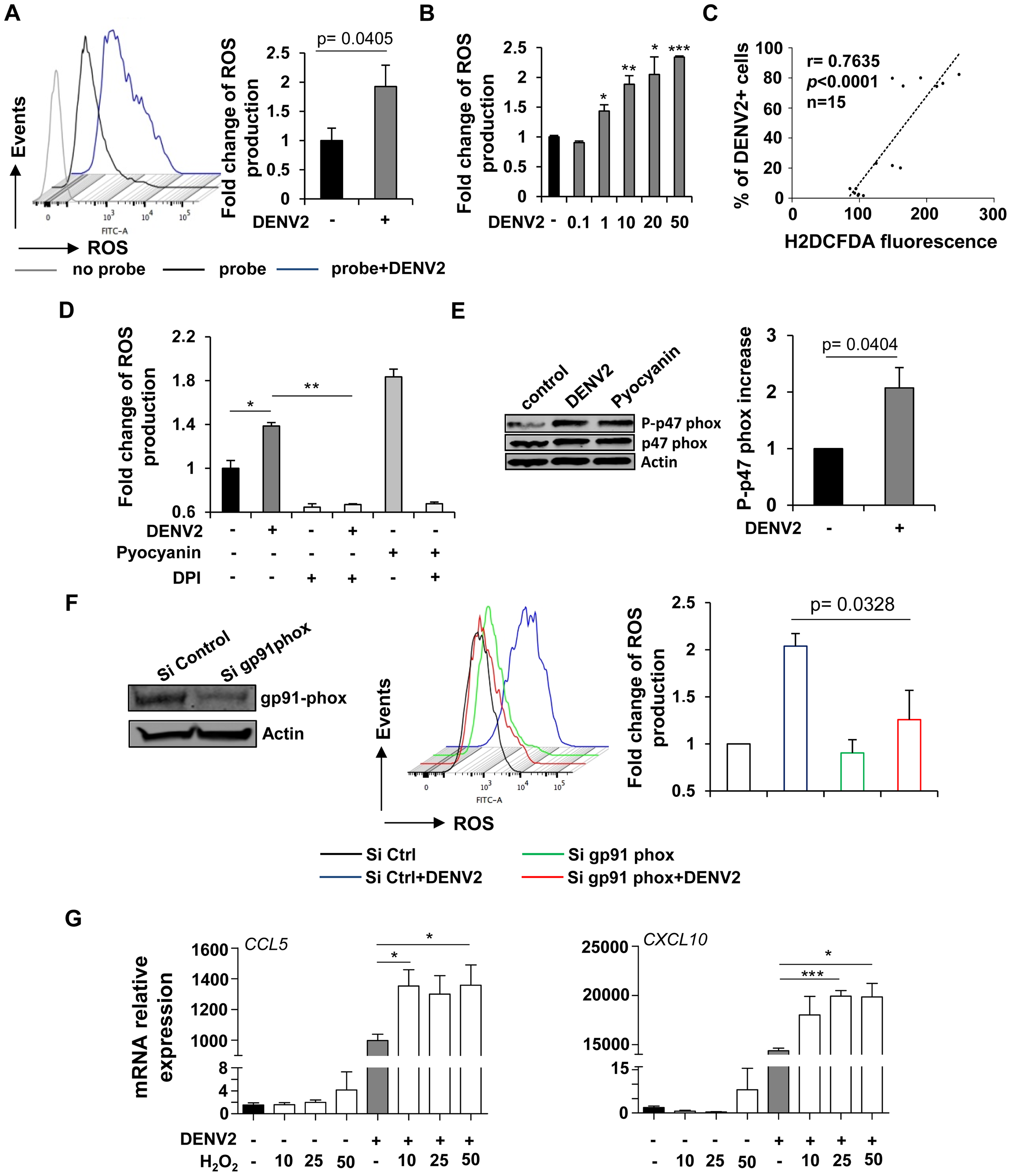 DENV-infected cells accumulate intracellular NOX-derived ROS which potentiate the immune response.