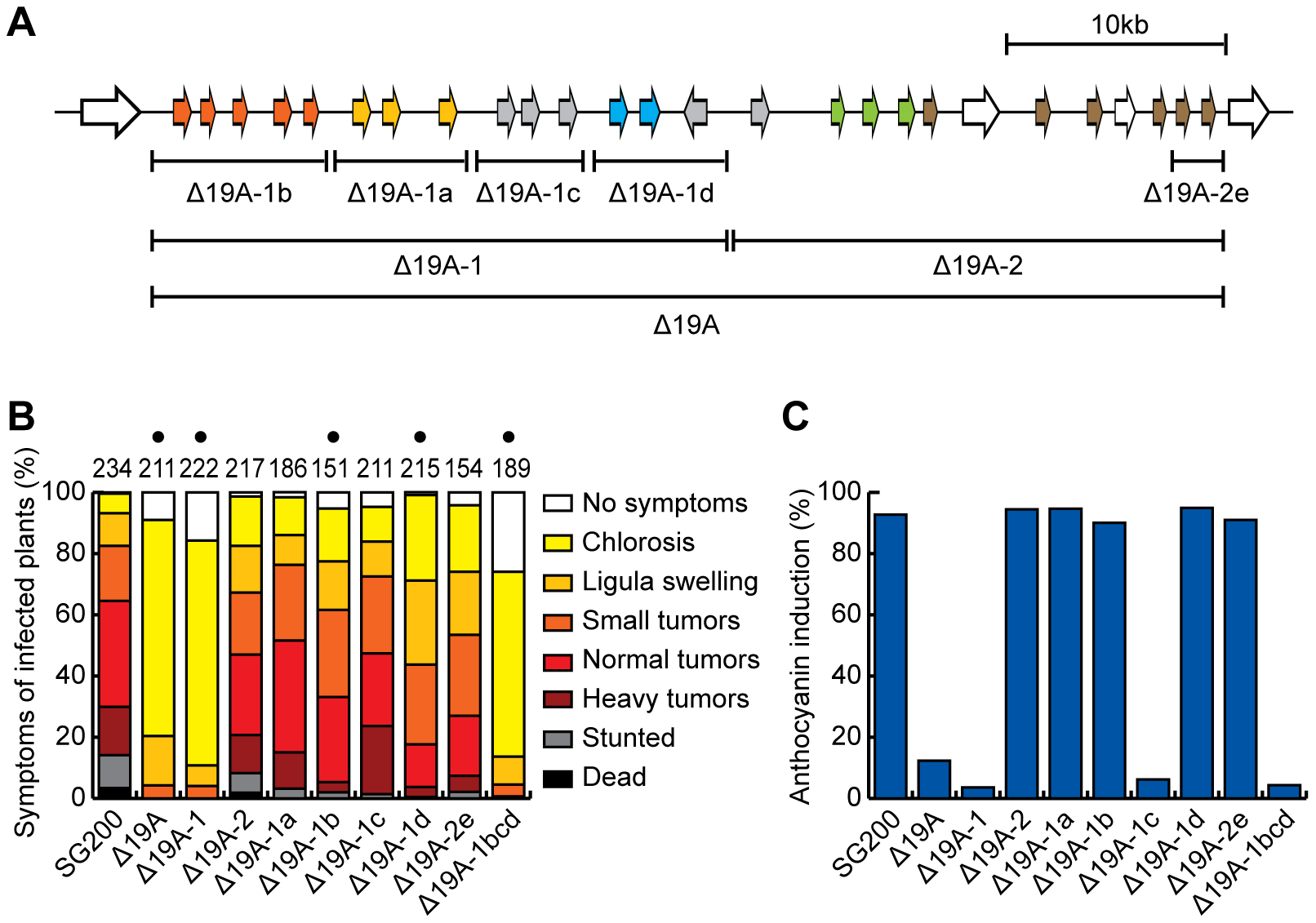 Mapping of effector genes responsible for the virulence phenotype of cluster 19A mutant.