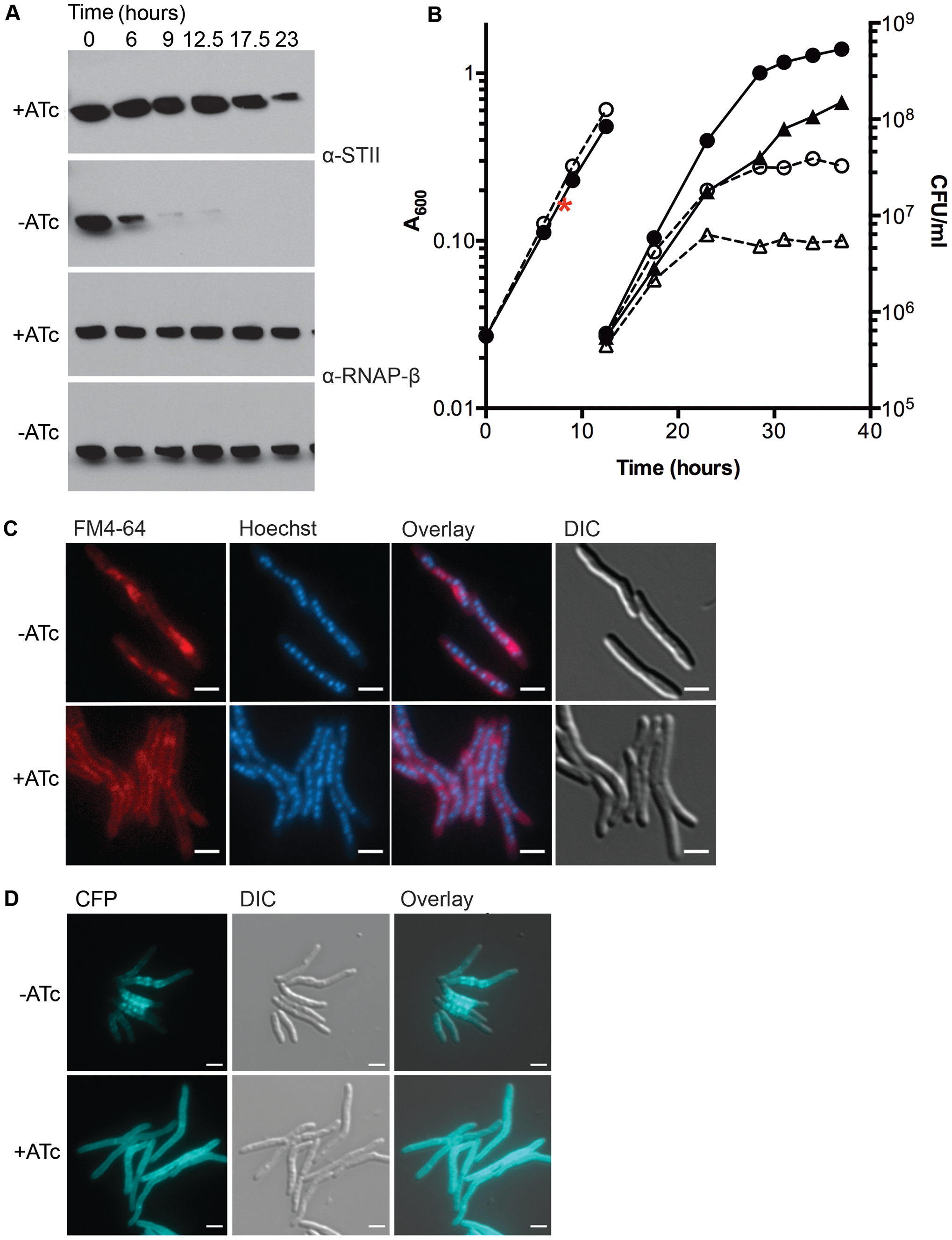 Depletion of DnaK is bacteriostatic in <i>M. smegmatis</i> and disrupts membrane structure.