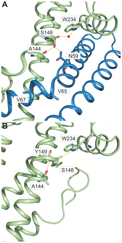 π–bulge in SipD domain 2 permitted the assembly of the PrgI-SipD<sub>ΔD1</sub> complex.