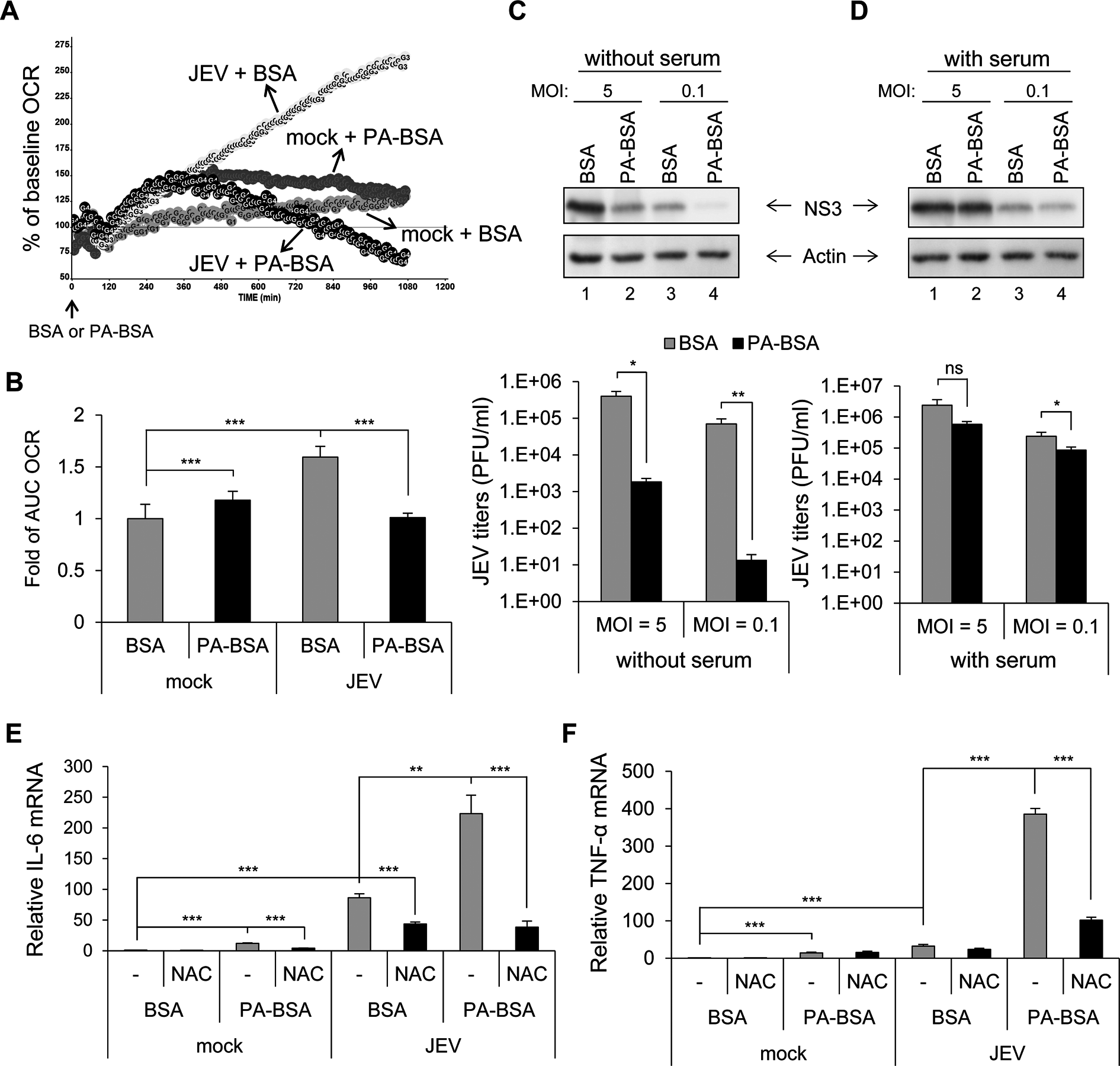 Impaired long-chain fatty acid (LCFA) β-oxidation and induction of reactive oxygen species (ROS)-dependent pro-inflammatory cytokines in cells infected with Japanese encephalitis virus (JEV).