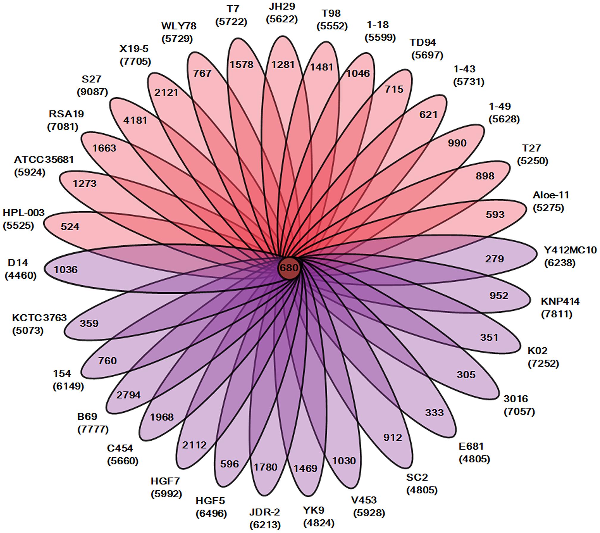 Genomic diversity of strains in the genus <i>Paenibacillus</i>.