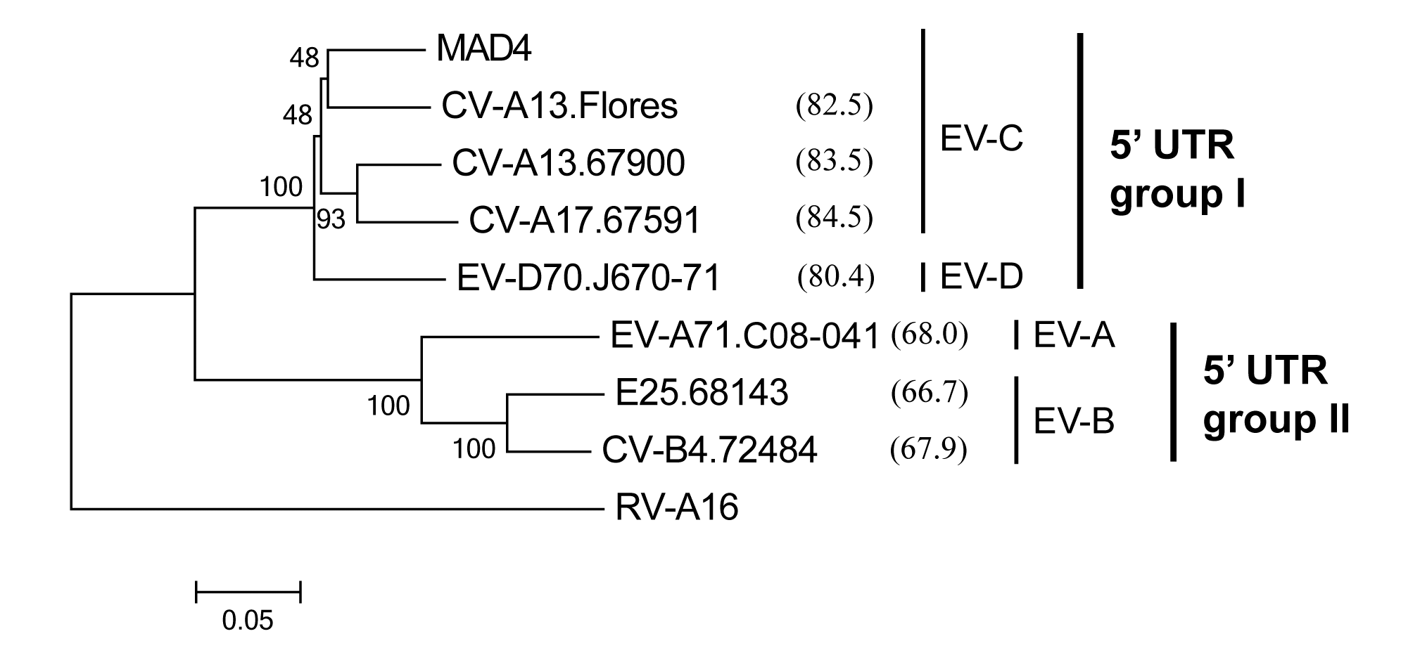 Phylogenetic relationships between the 5' UTR sequences of the eight 5' partners.
