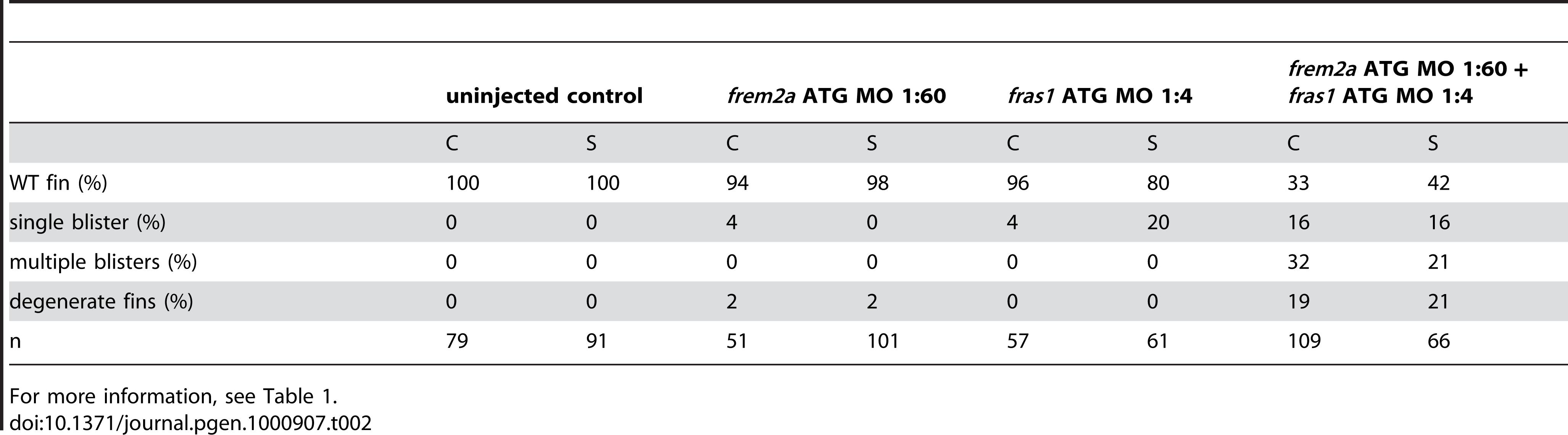 Synergistic interaction between <i>frem2a</i> and <i>fras1</i>.