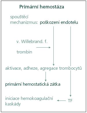 Schéma 1. Mechanizmus primární hemostázy. TF: tkáňový faktor