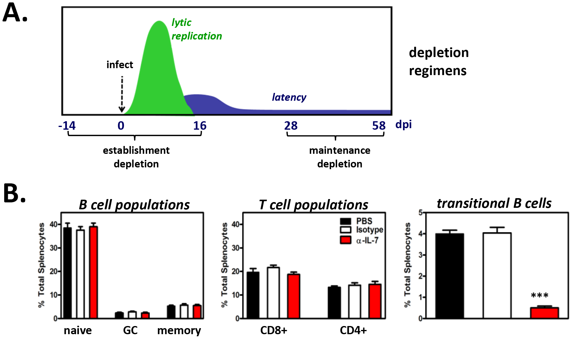 Short-term <i>in vivo</i> anti-IL-7 treatment results in depletion of developing B cells but does not alter mature B cell or mature T cell subsets.