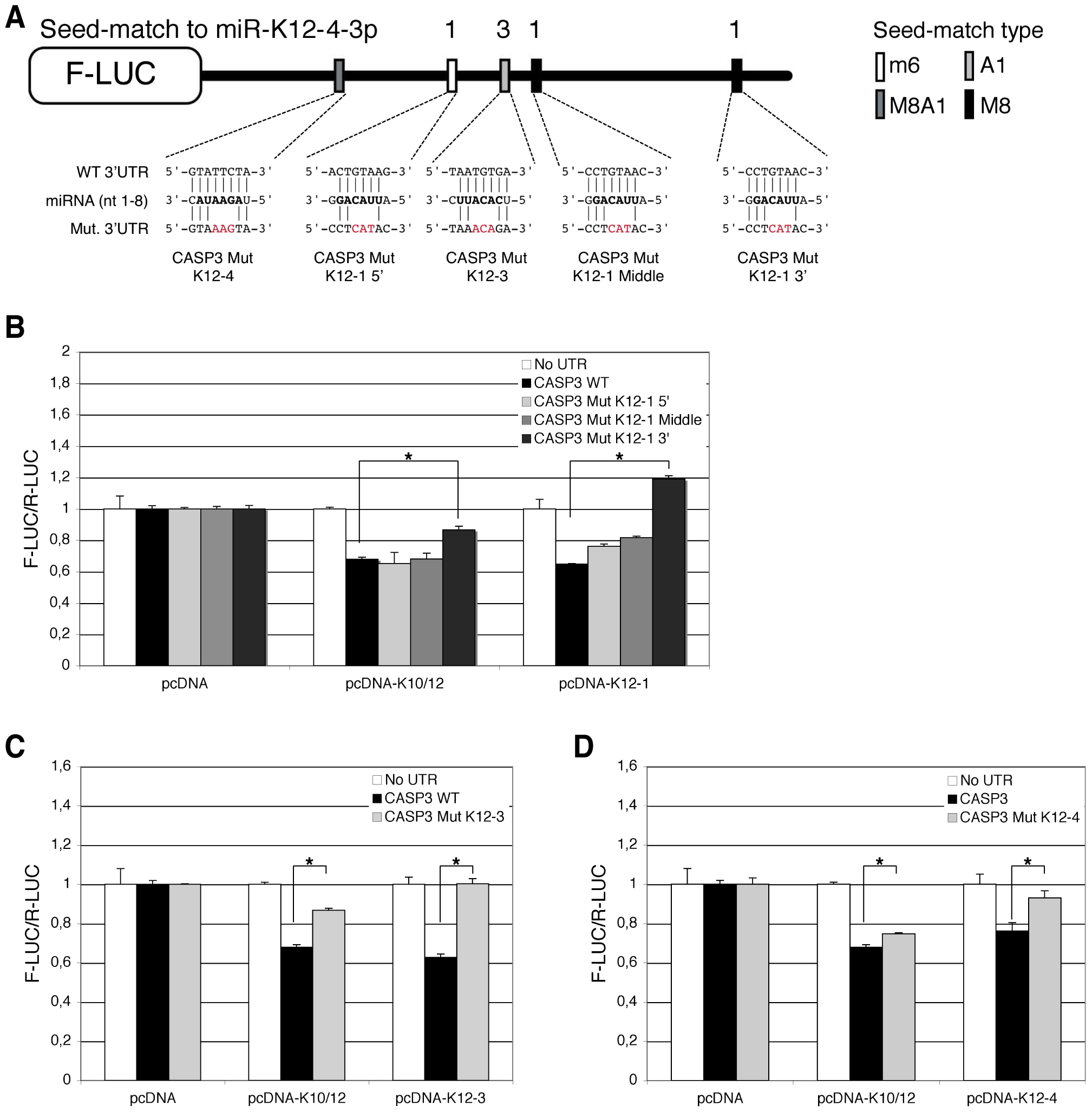 Identification of KSHV miRNAs binding sites in the 3′ UTR of Casp3 transcript by mutational analysis.