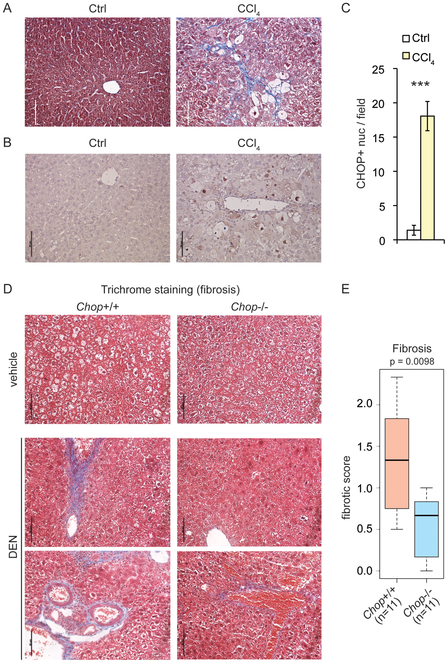CHOP is induced by fibrotic insult and promotes fibrosis.