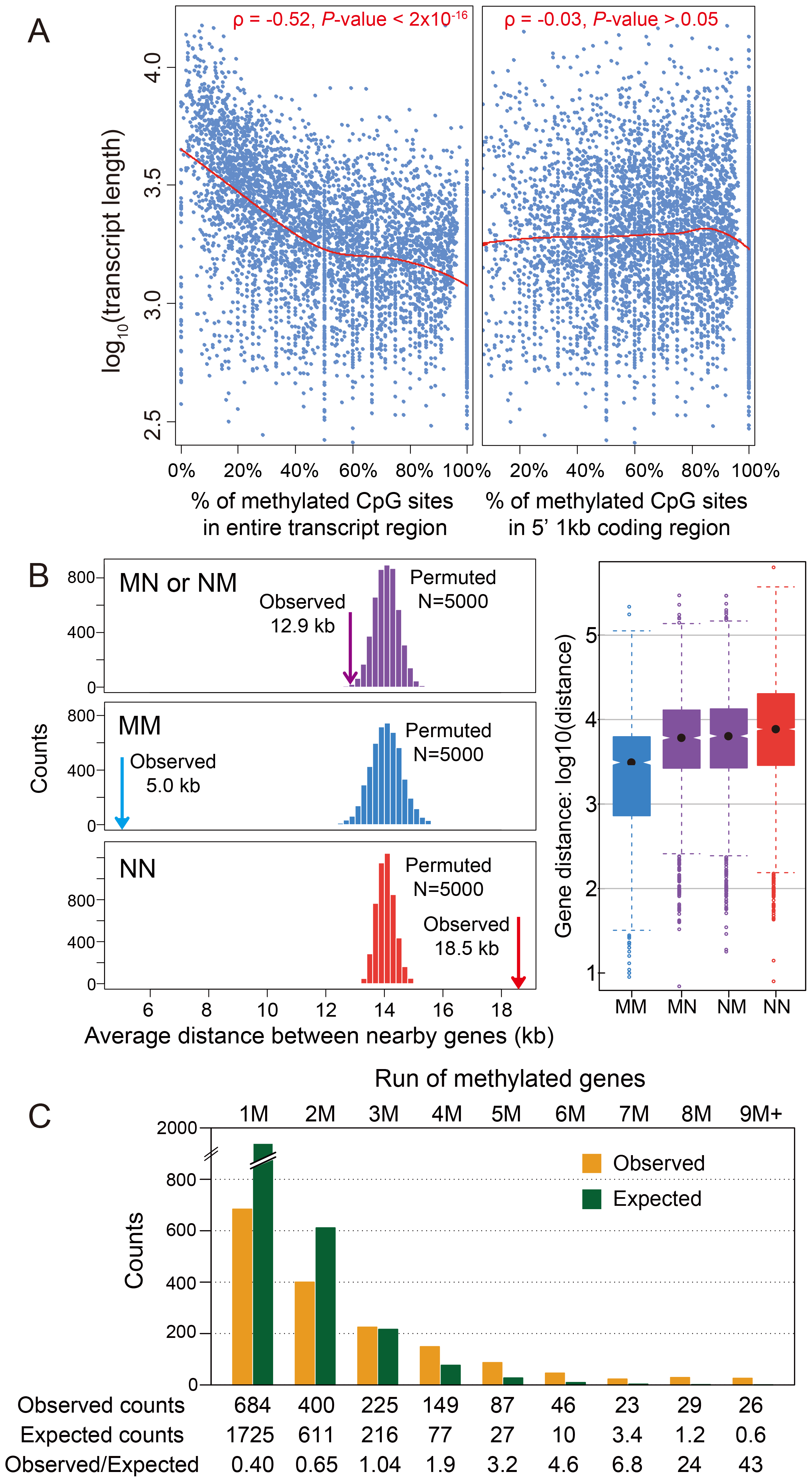 DNA methylation and gene length, exon number and gene locations.