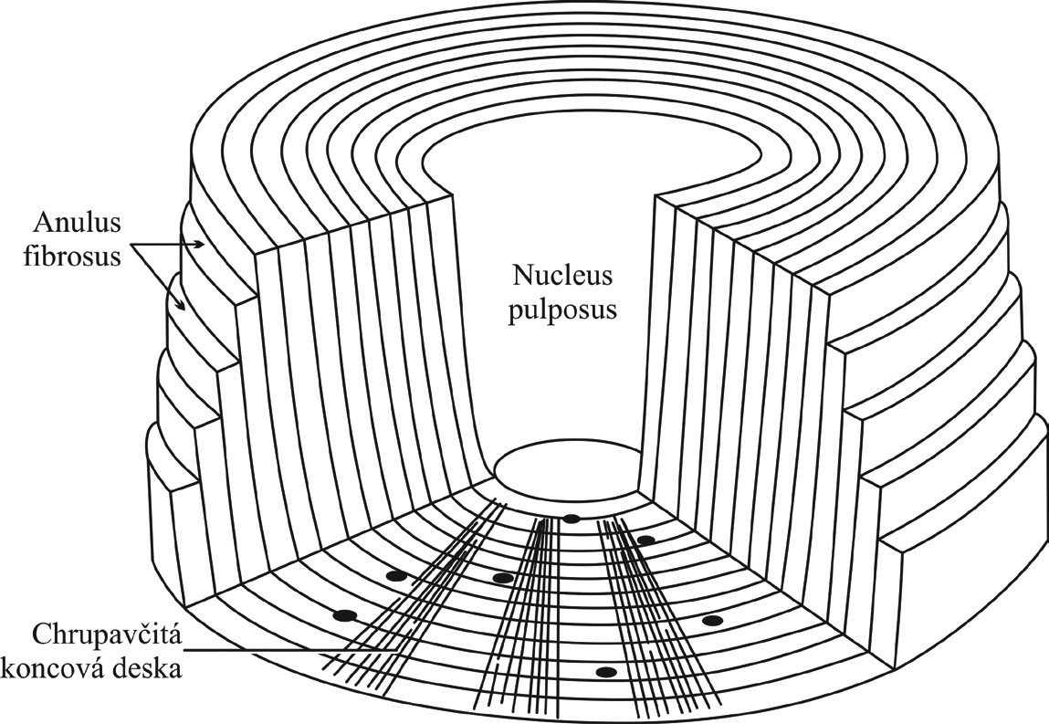 Struktura meziobratlové ploténky