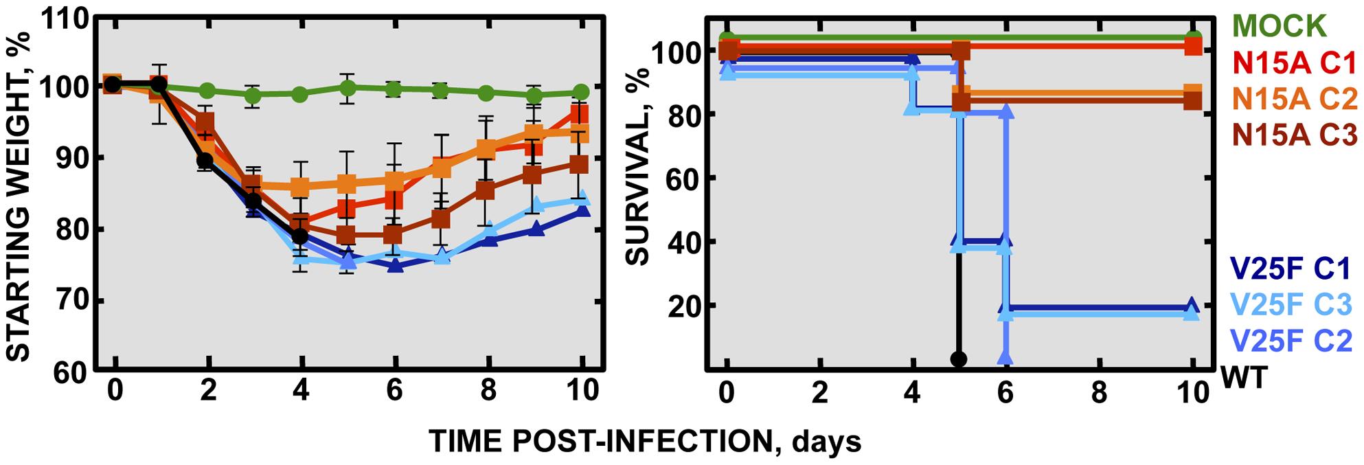 Pathogenesis caused by rSARS-CoV-EIC<sup>−</sup> in BALB/c mice.