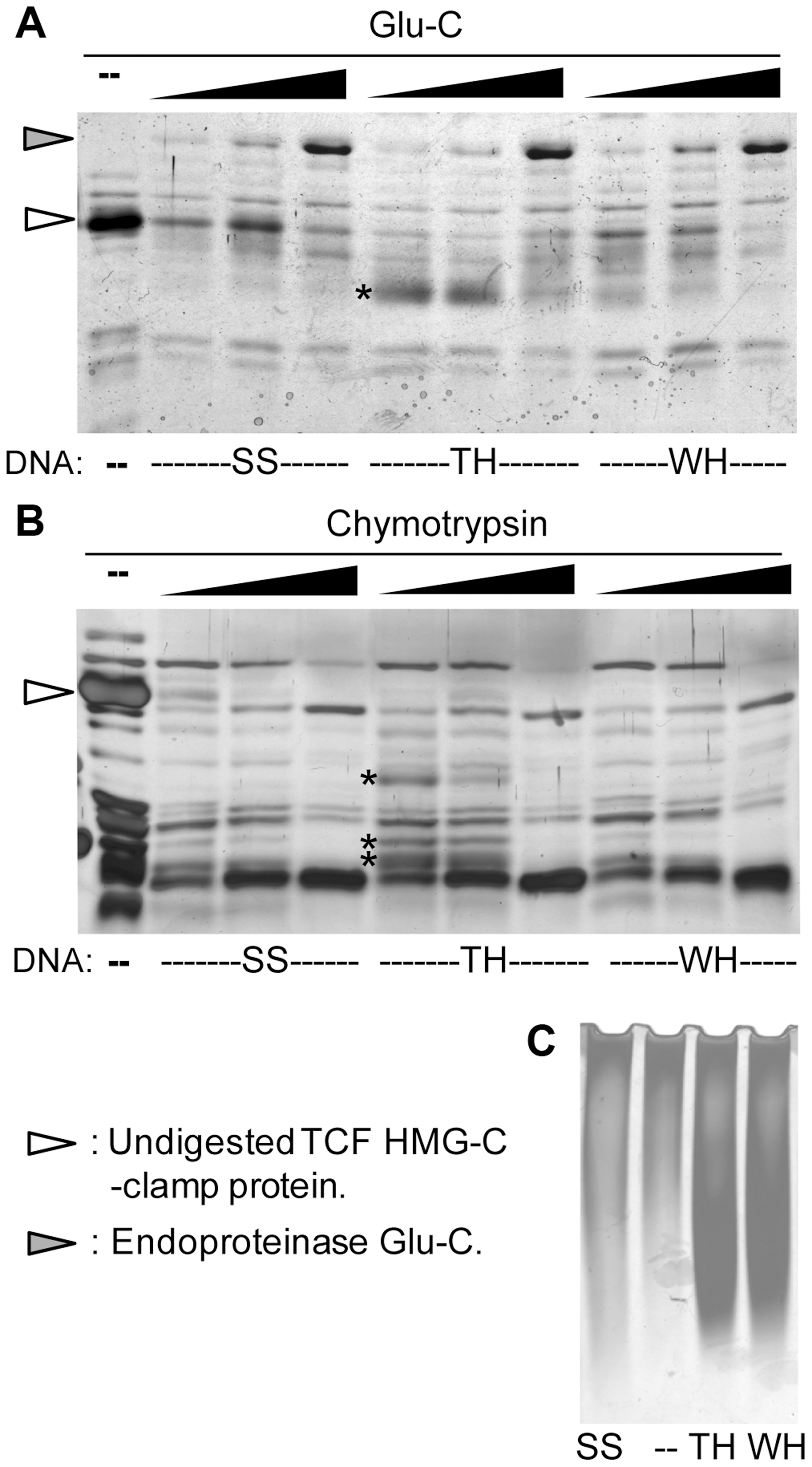 The HMG and C-clamp domains adopt different conformations when bound to distinct binding sites.