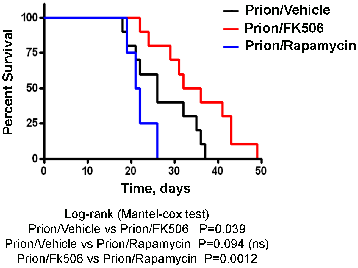 Increase in survival of prion infected animals by treatment with CaN inhibitor.