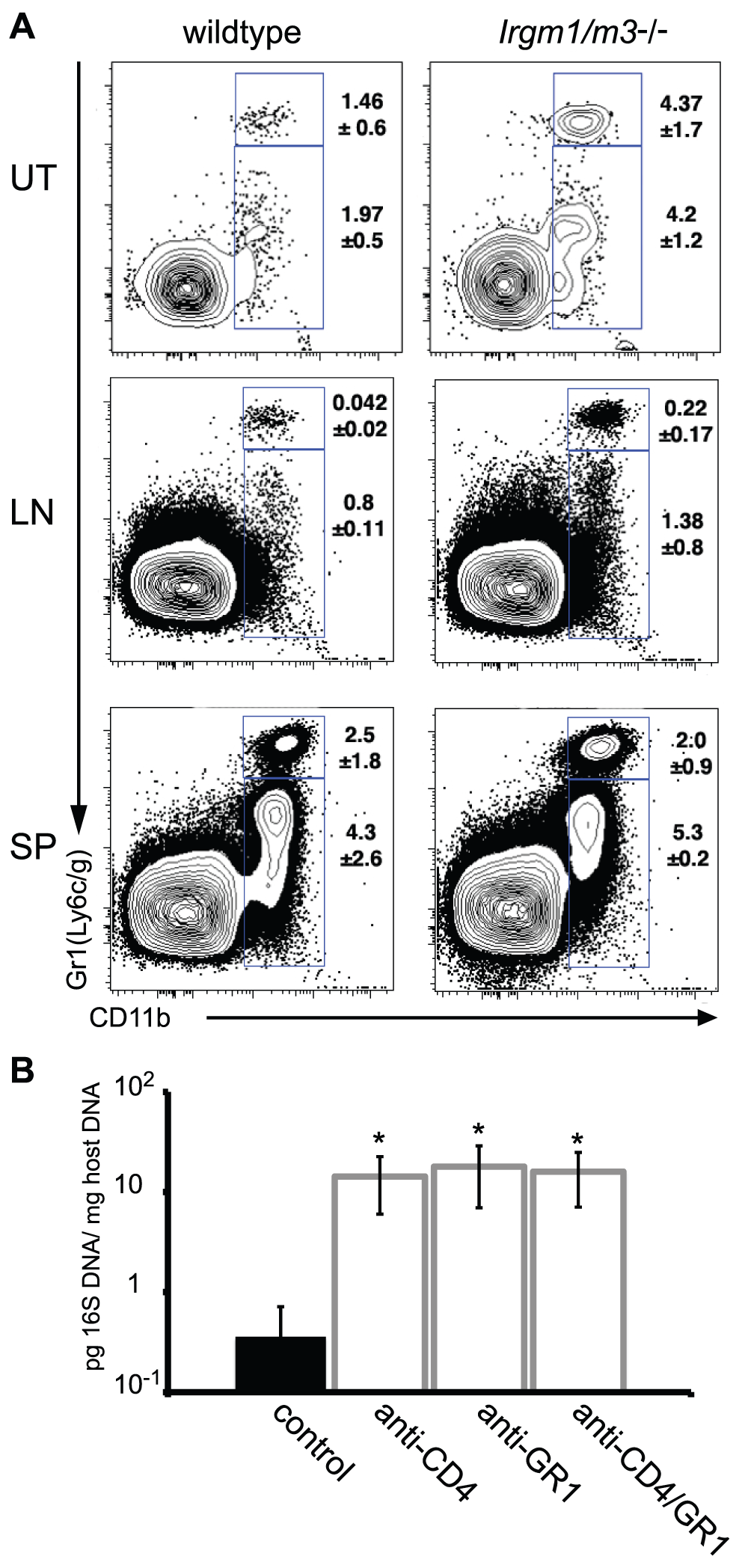 A neutrophil surge into the uterus of <i>C. trachomatis</i>-infected <i>Irgm1/m3</i><sup>(-/-)</sup> mice plays a role in immune clearance.