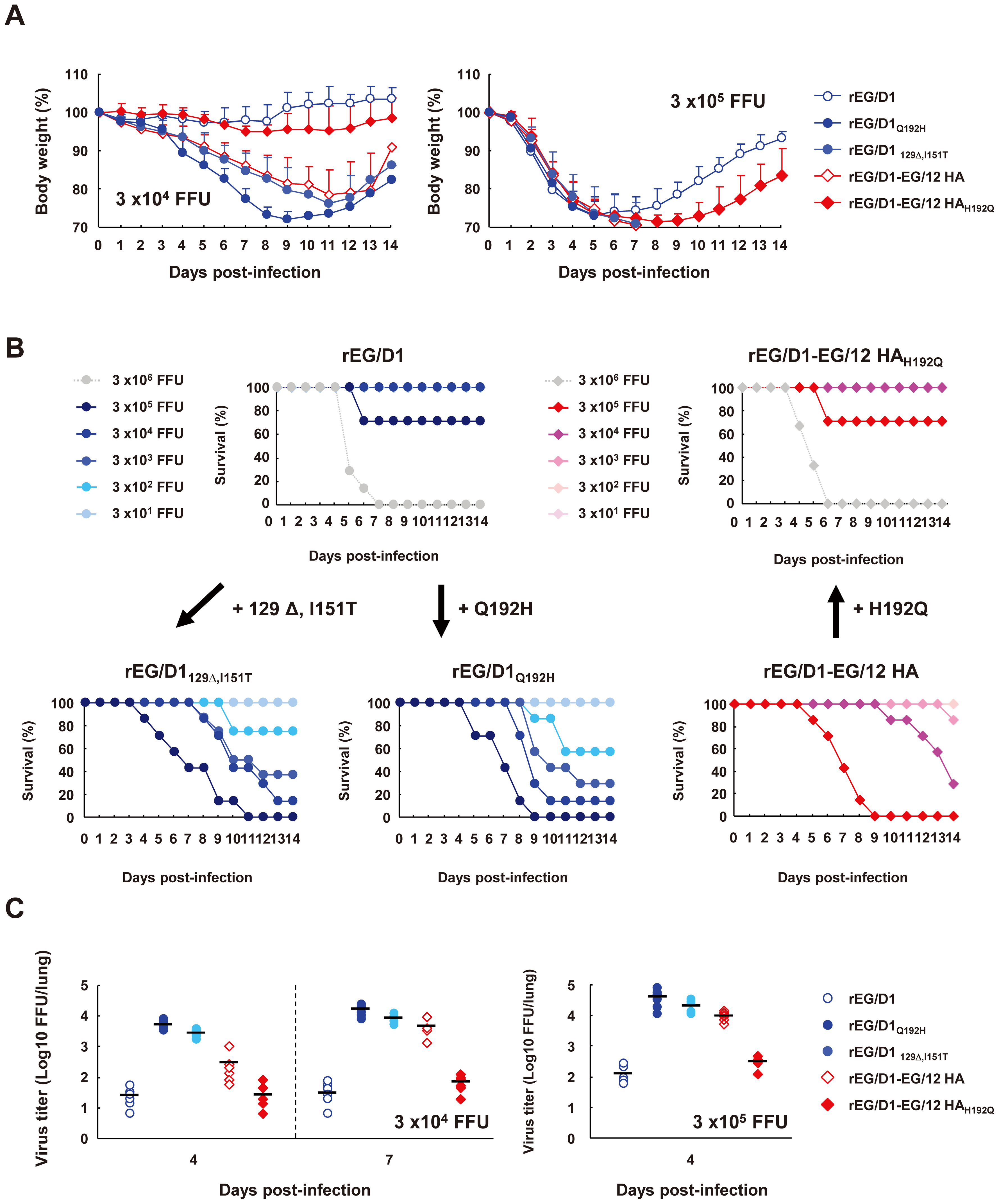 Mortality and weight loss of mice infected with rEG/D1 viruses.