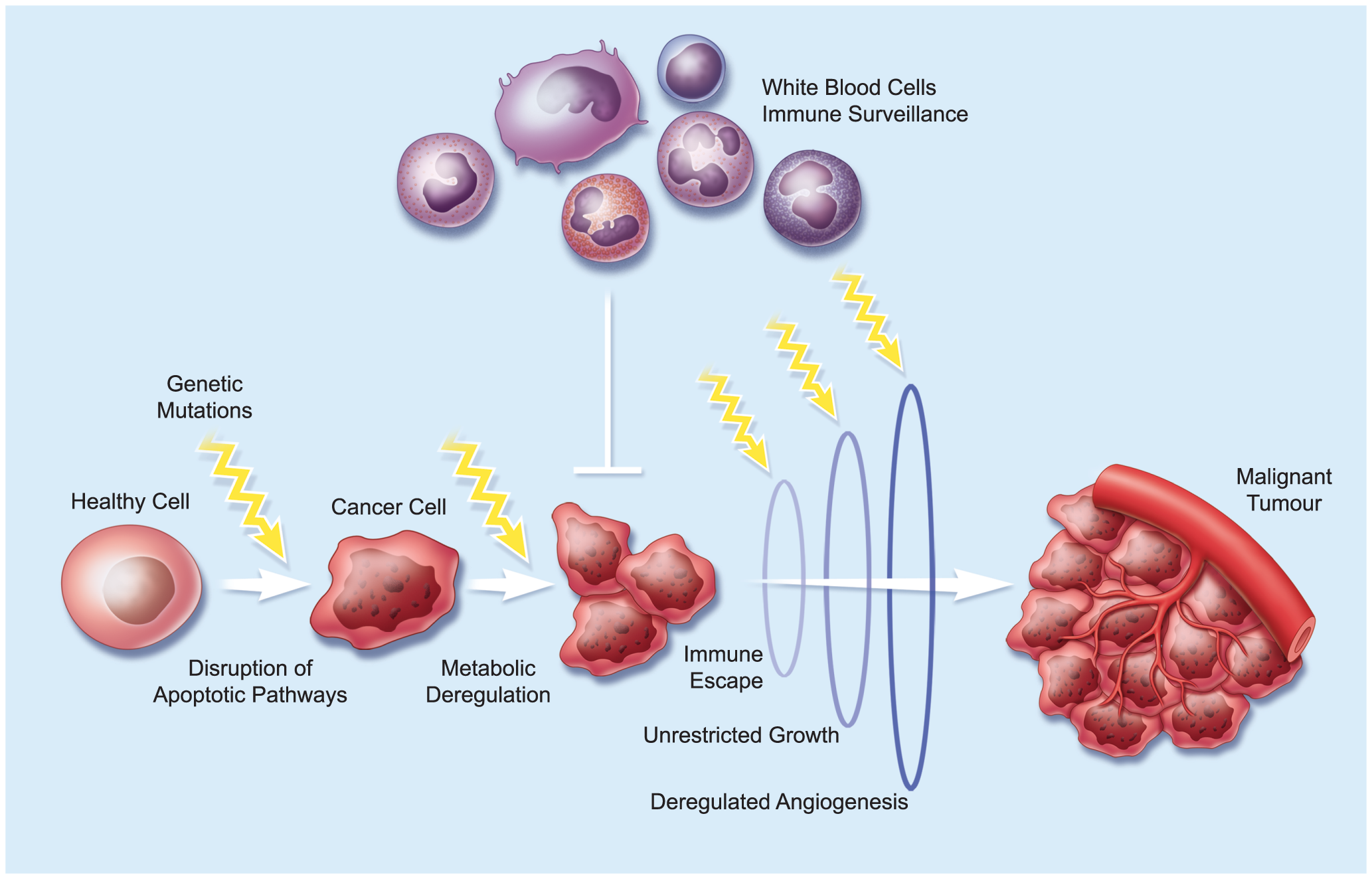 Tumour Evolution.