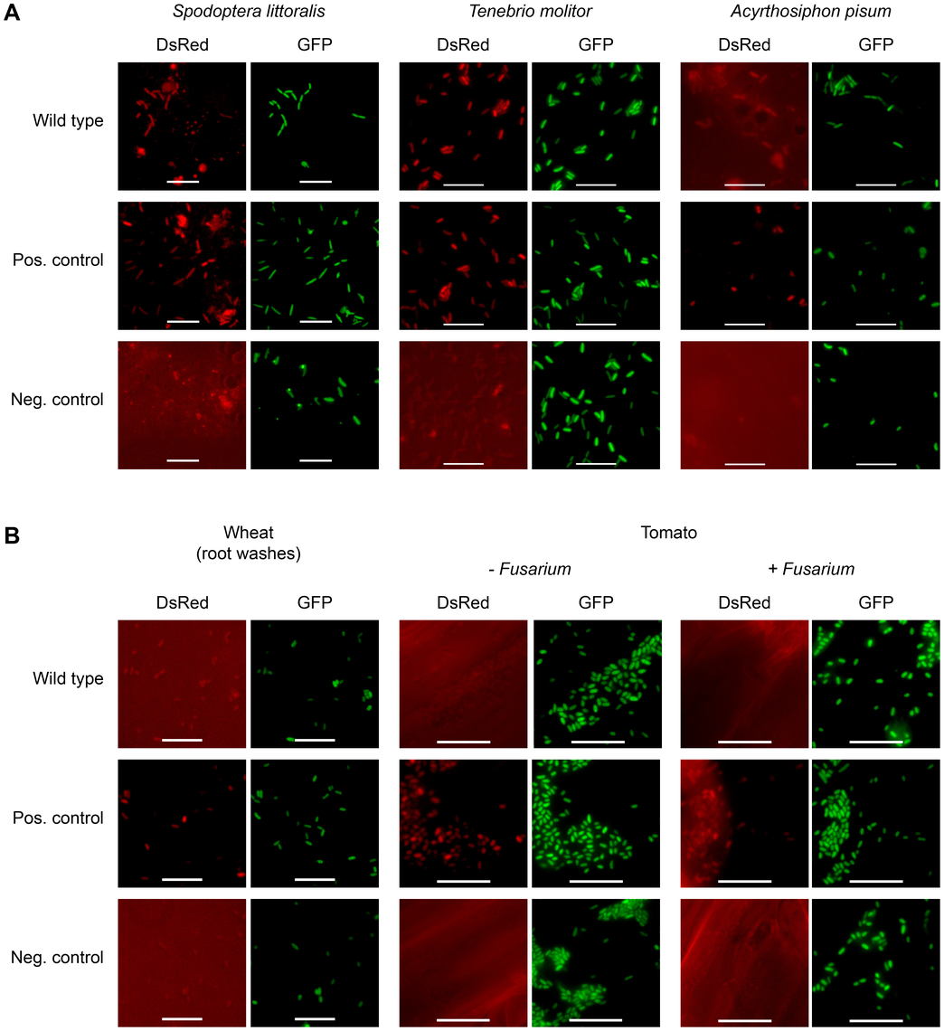Fit toxin expression is controlled in a host-specific manner.