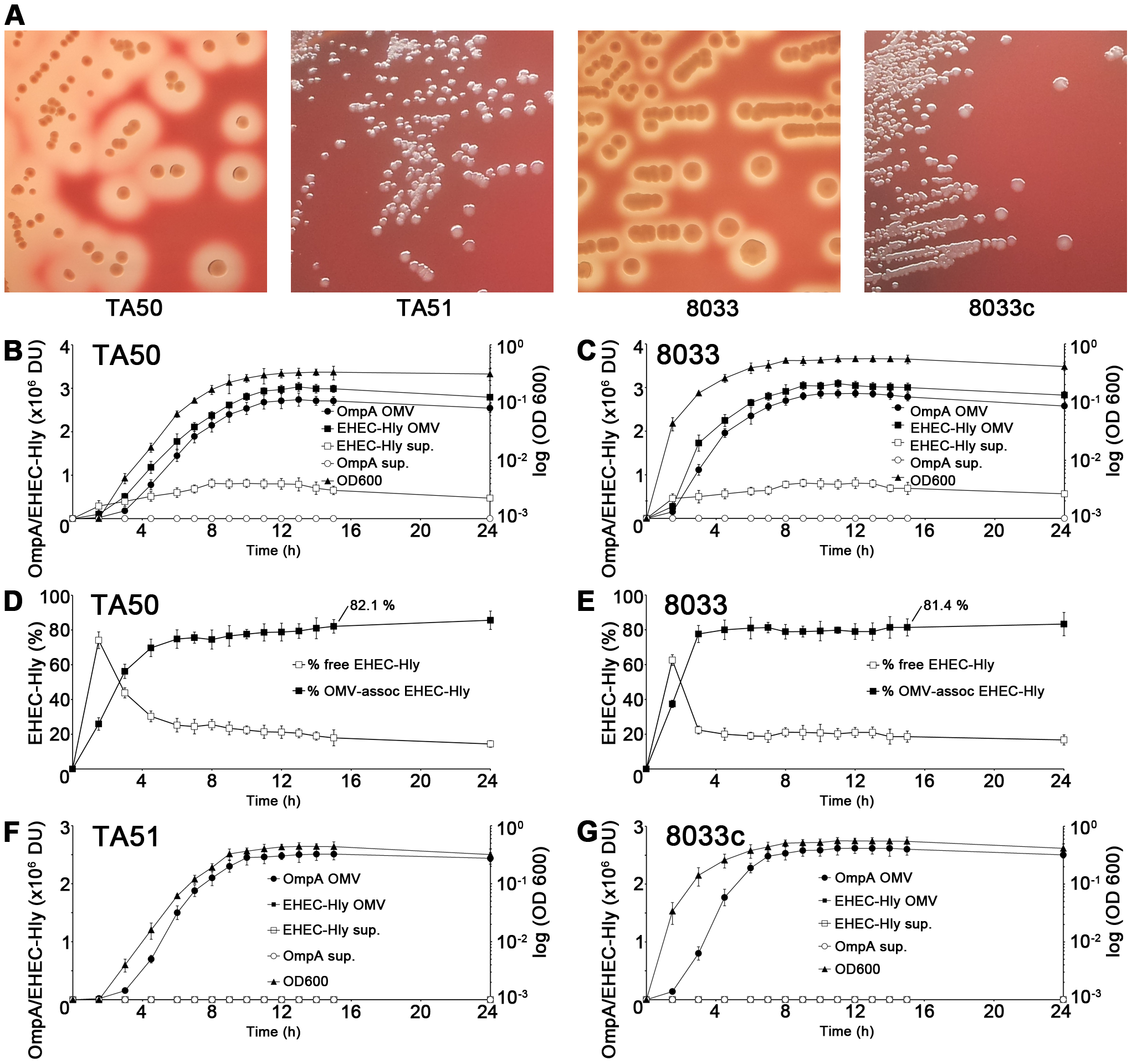 Hemolytic phenotypes and kinetics of EHEC-Hly secretion, OMV production and EHEC-Hly-OMV association in strains used in this study.