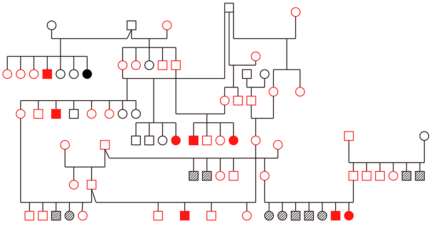 Pedigree of family of Old English Sheepdogs genotyped with microsatellite markers for linkage analysis.