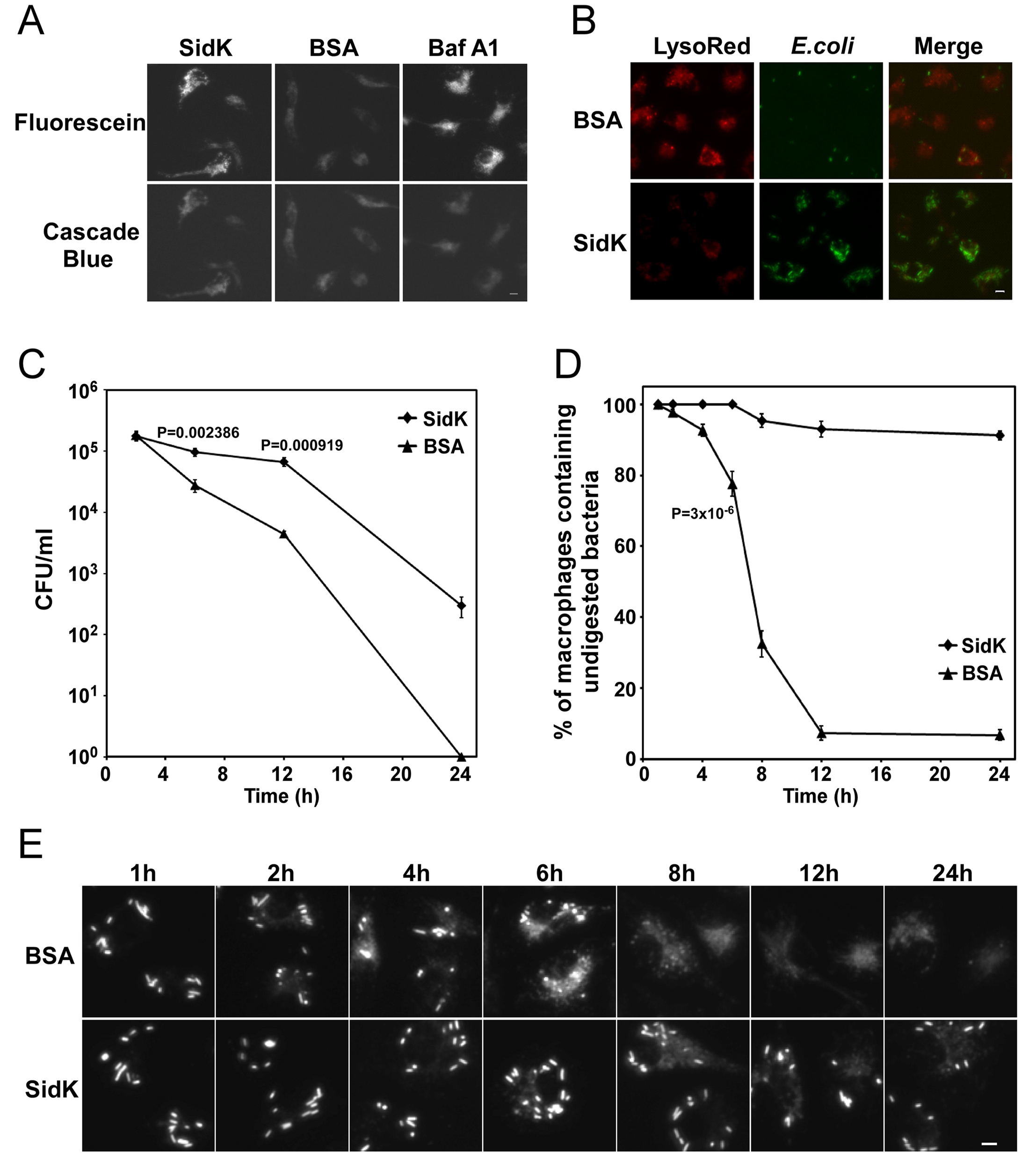 Macrophages loaded with SidK are defective in phagosomal acidification and lysosomal digestion of bacteria.