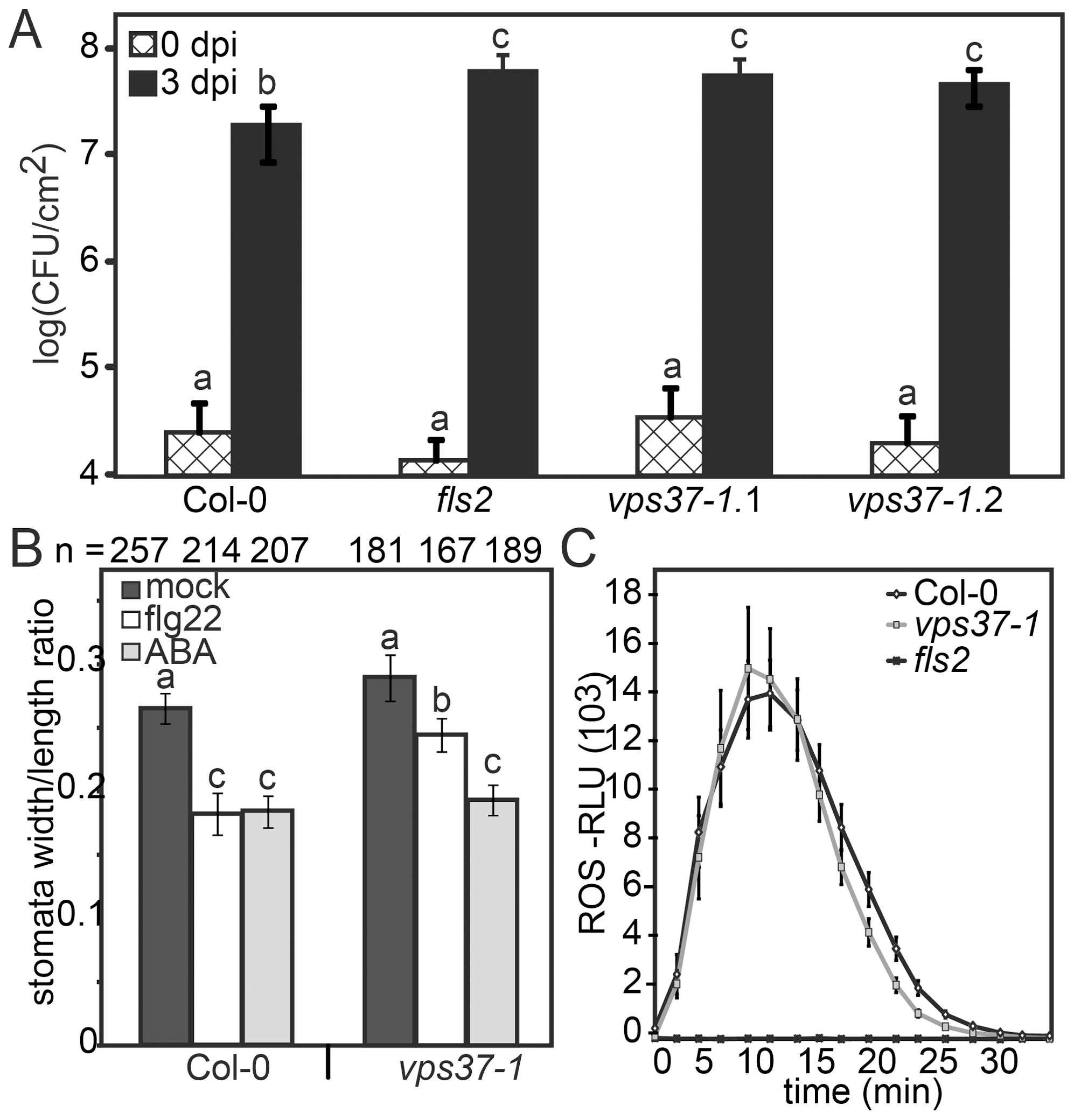 Knock-out <i>vps37-1</i> mutants are impaired in immunity.