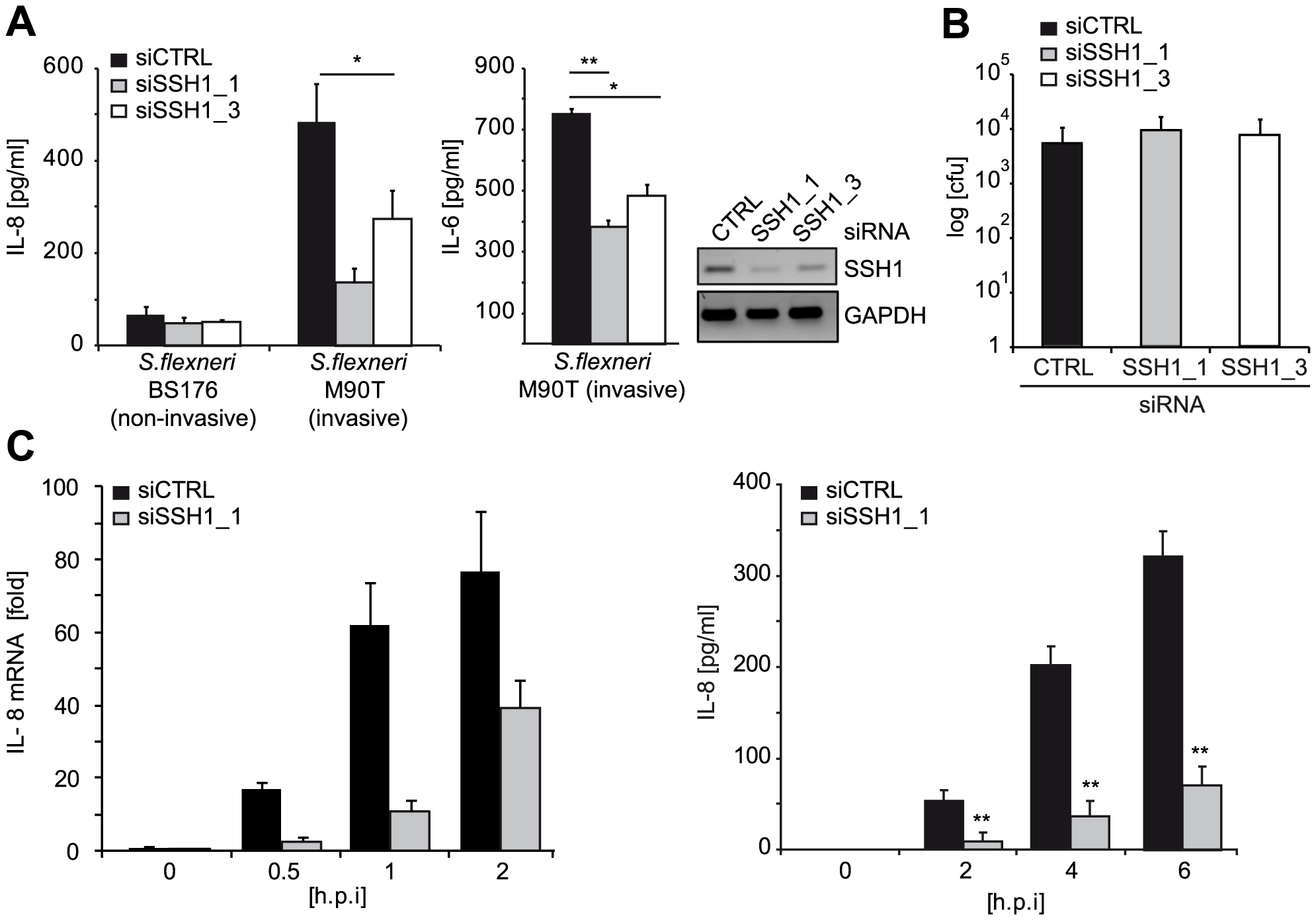SSH1 is involved in early <i>Shigella</i>-induced pro-inflammatory responses.