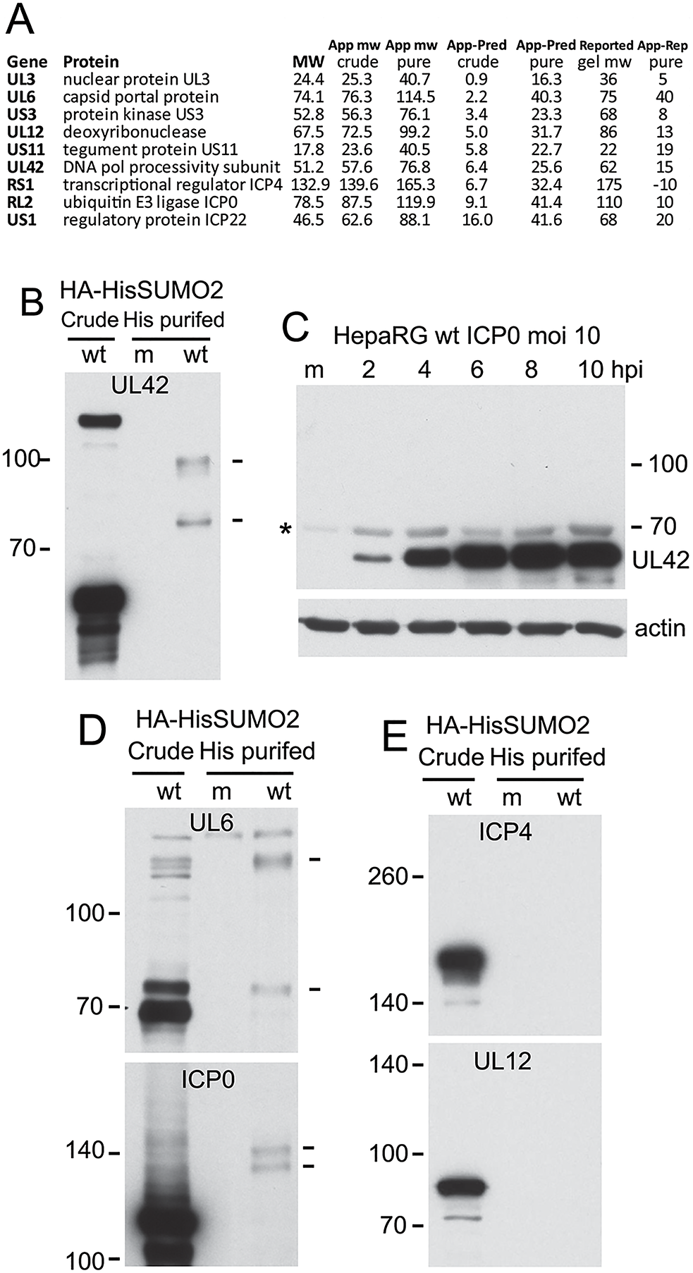 Analysis of potential sumoylation of HSV-1 proteins.