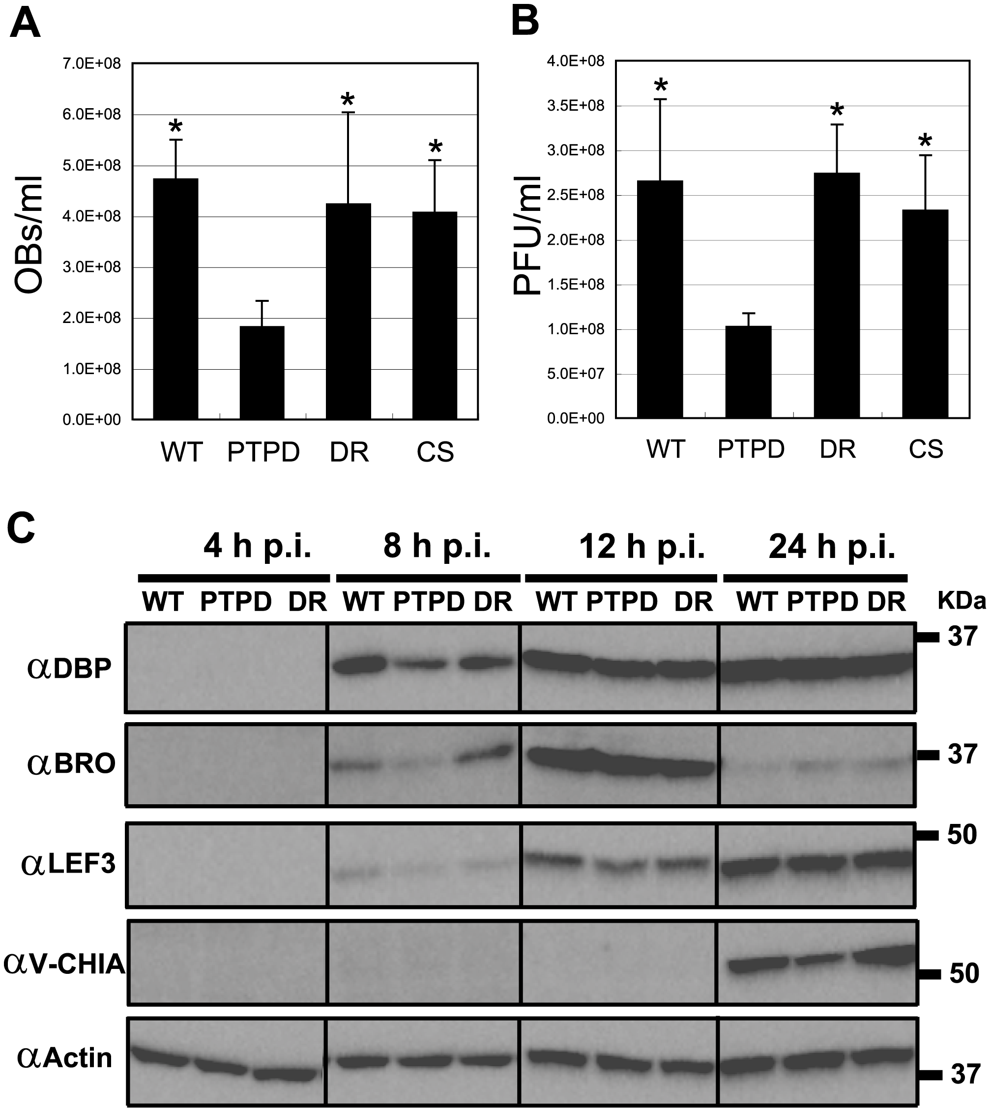 BmPTPD produces fewer progeny in 5<sup>th</sup> instar <i>B. mori</i> and shows a delay in late gene expression in BmN cells.