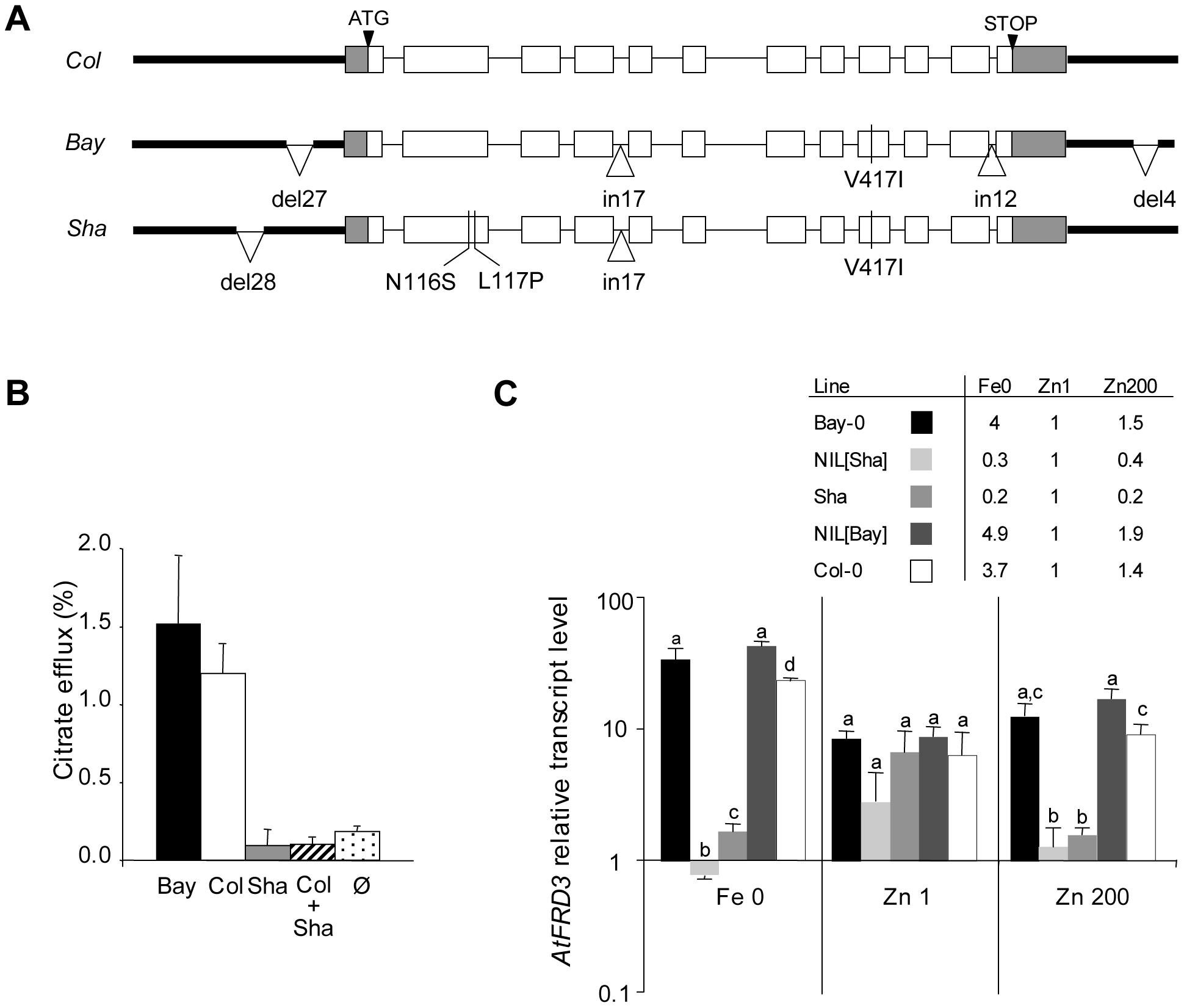 Natural variation in the <i>FRD3</i> sequence, FRD3 transport activity, and <i>FRD3</i> transcript accumulation.