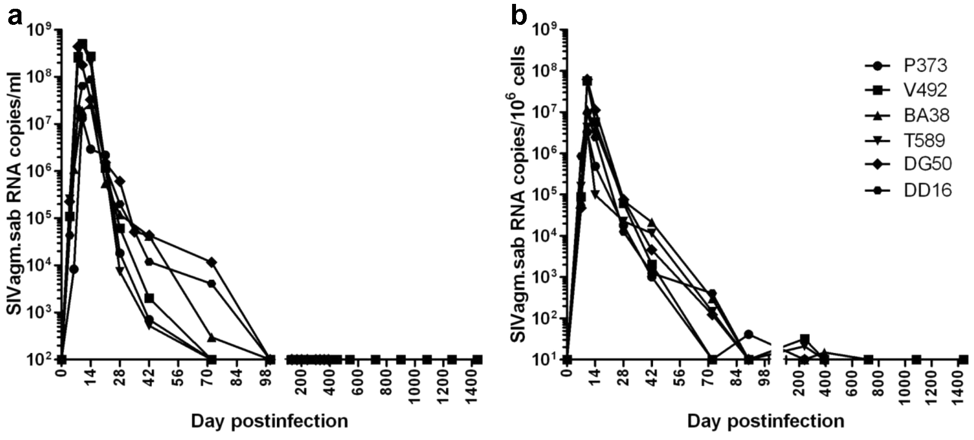 Viral replication during acute and chronic SIVagm infection of RMs.