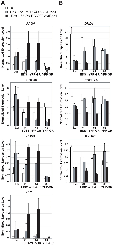 Quantitative transcript profiling of EDS1-dependent genes in EDS1-YFP-GR transgenic lines after triggering RPS4 resistance.