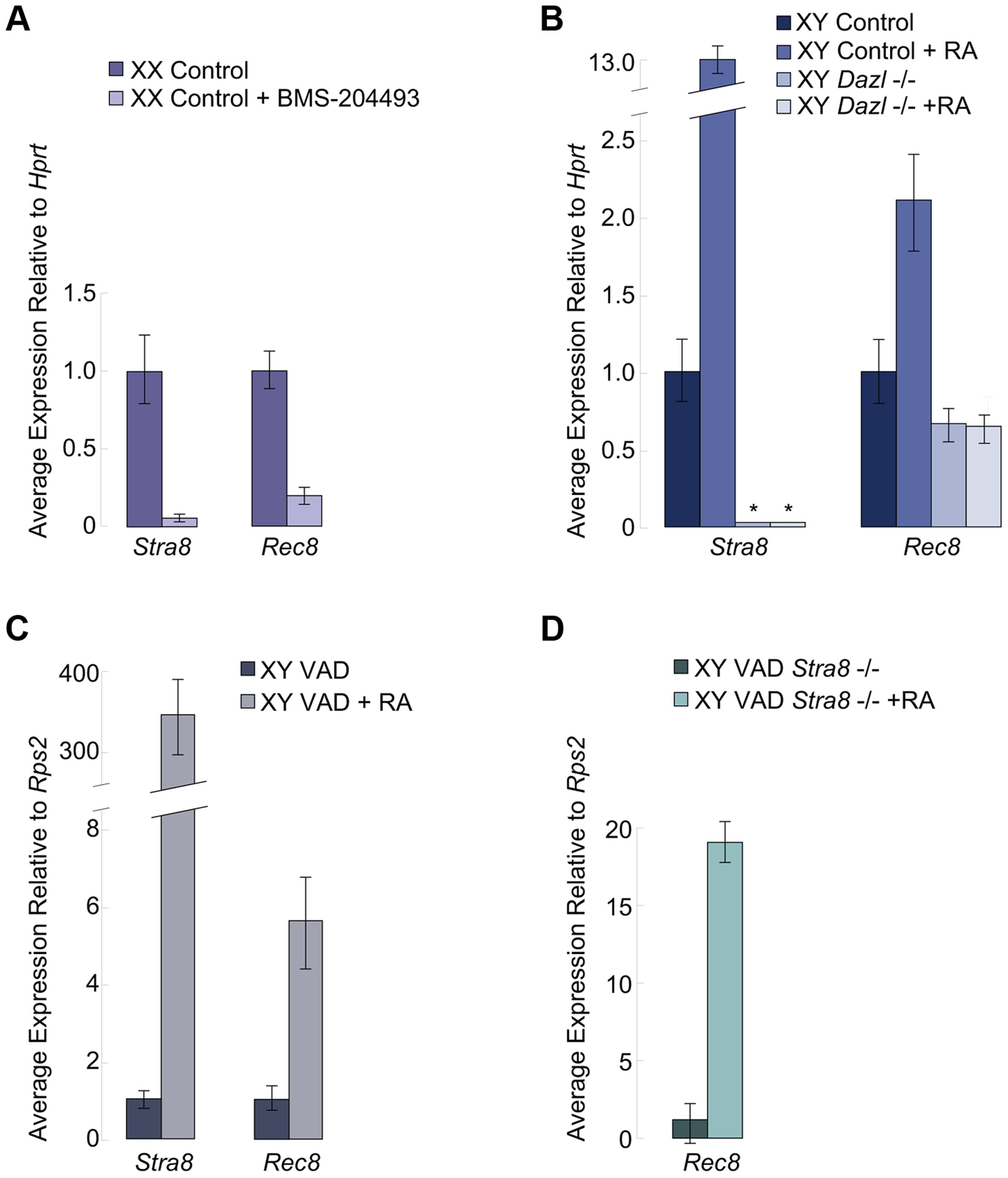 In fetal ovaries and postnatal testes, <i>Rec8</i> is a target of RA signaling.