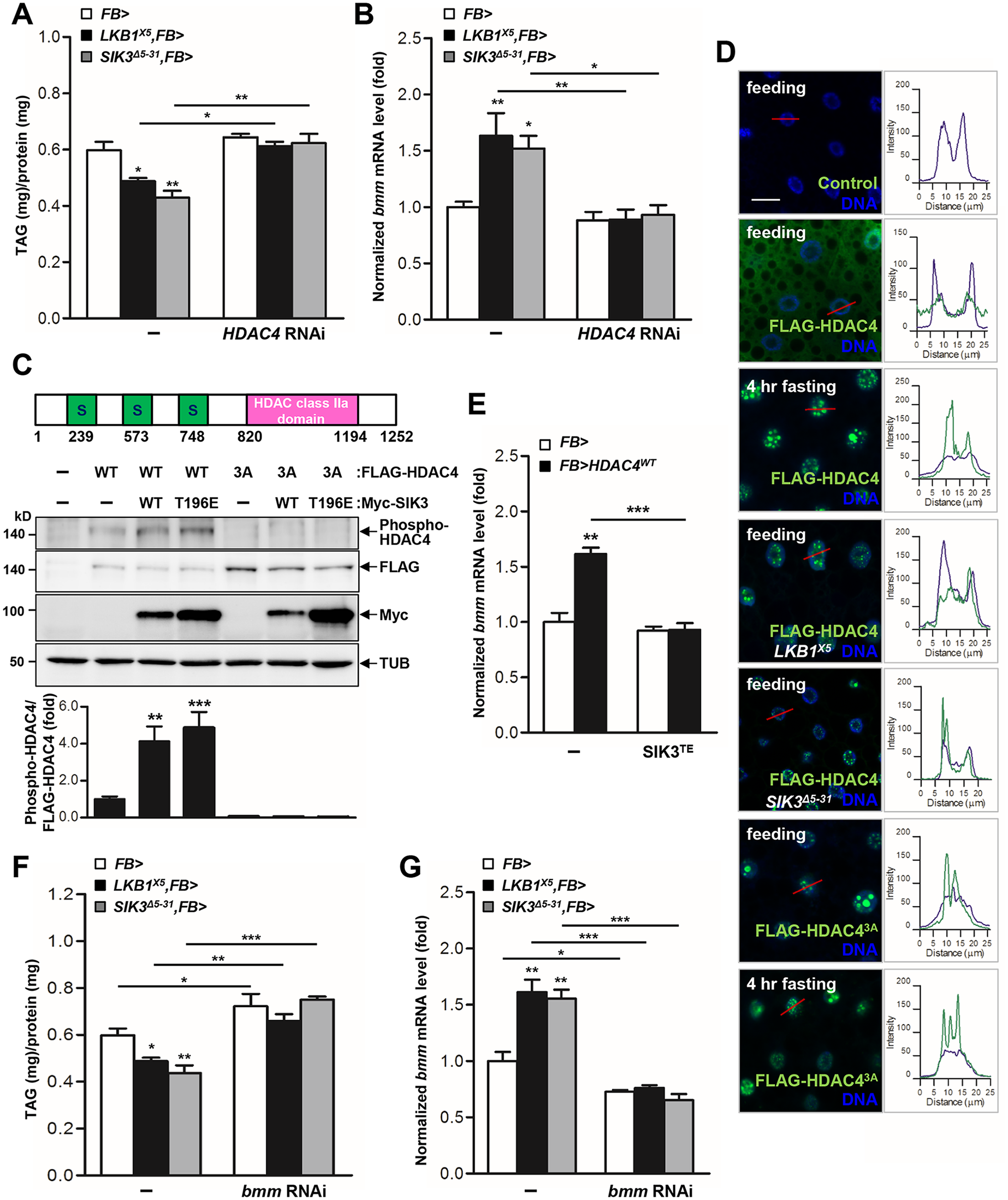 HDAC4 is the responsible target of LKB1-SIK3 signaling for controlling lipid homeostasis.